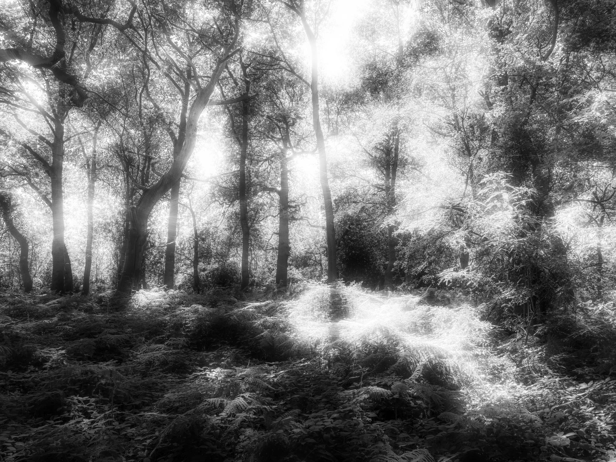 Ghost Series 6 by Sarah Walters
