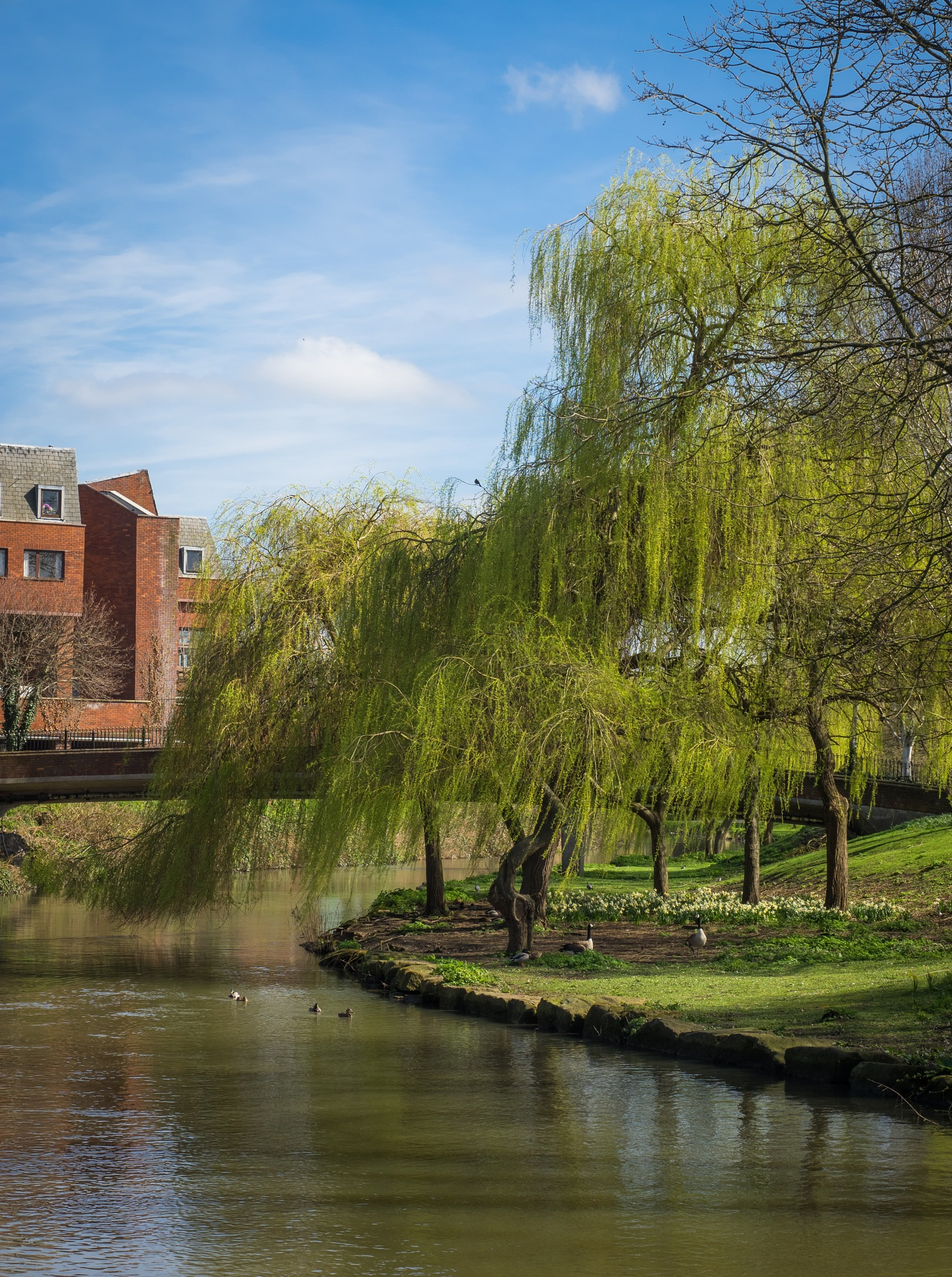 Weeping Willows by Sarah Walters
