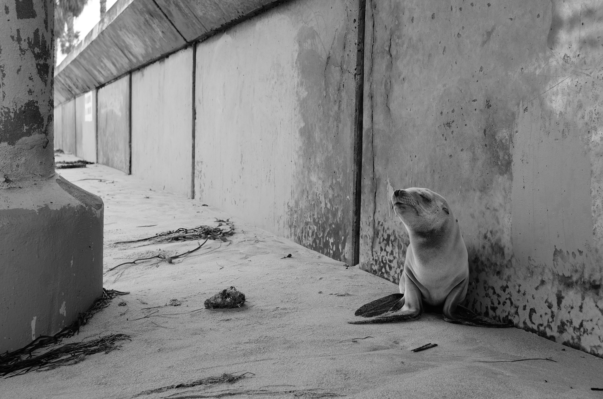 Baby Sea Lion in OB by Andrew Fuchs