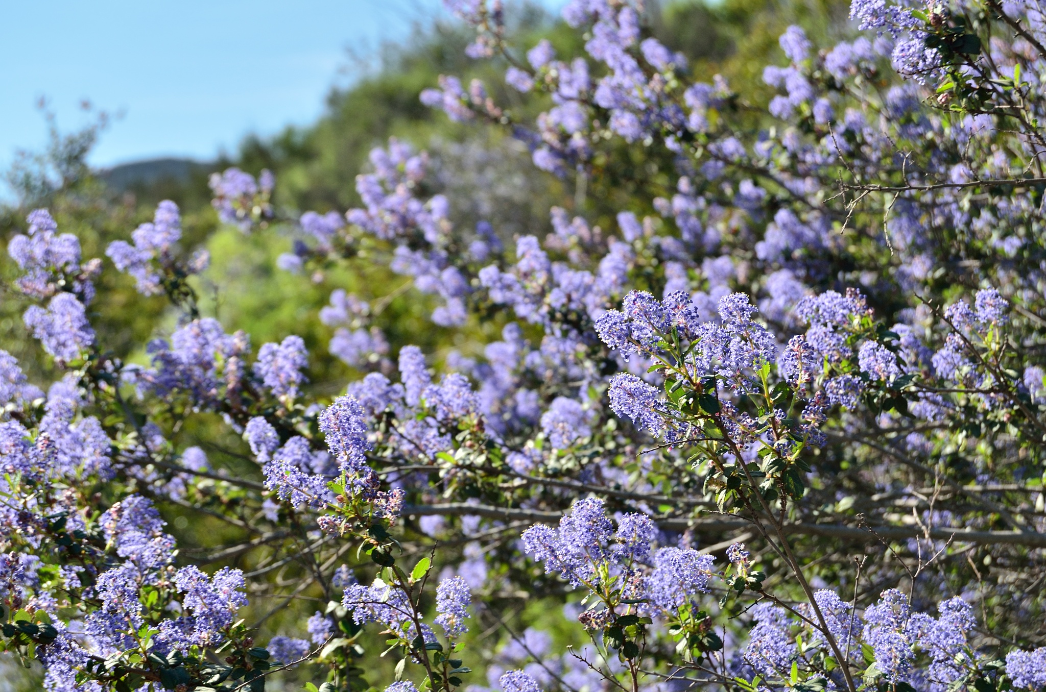 Flowers on Mission Trails by Andrew Fuchs