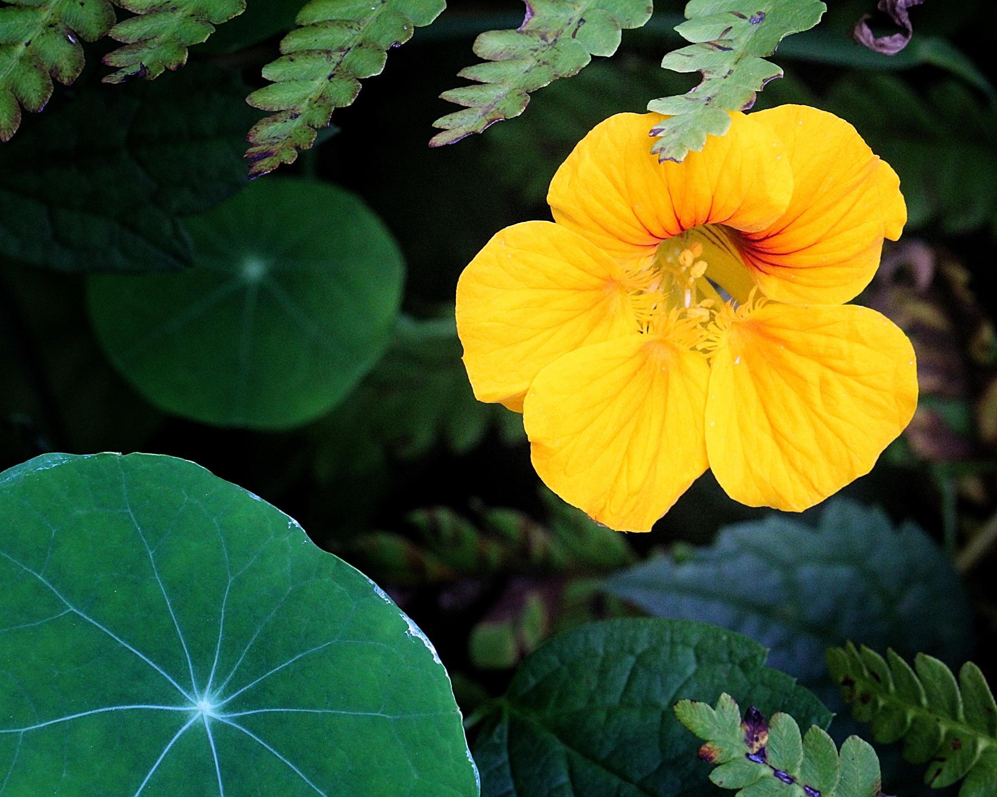 North Carolina Wildflower by Lyndon Haston