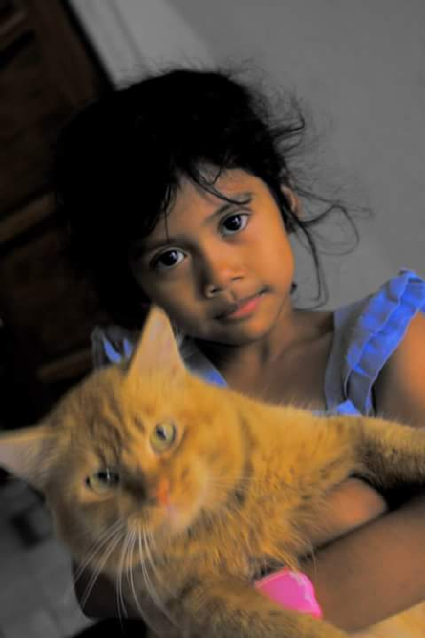 cut and chiko pet cat lost in the earth swallow by Djamhur Abdullah Mimbar