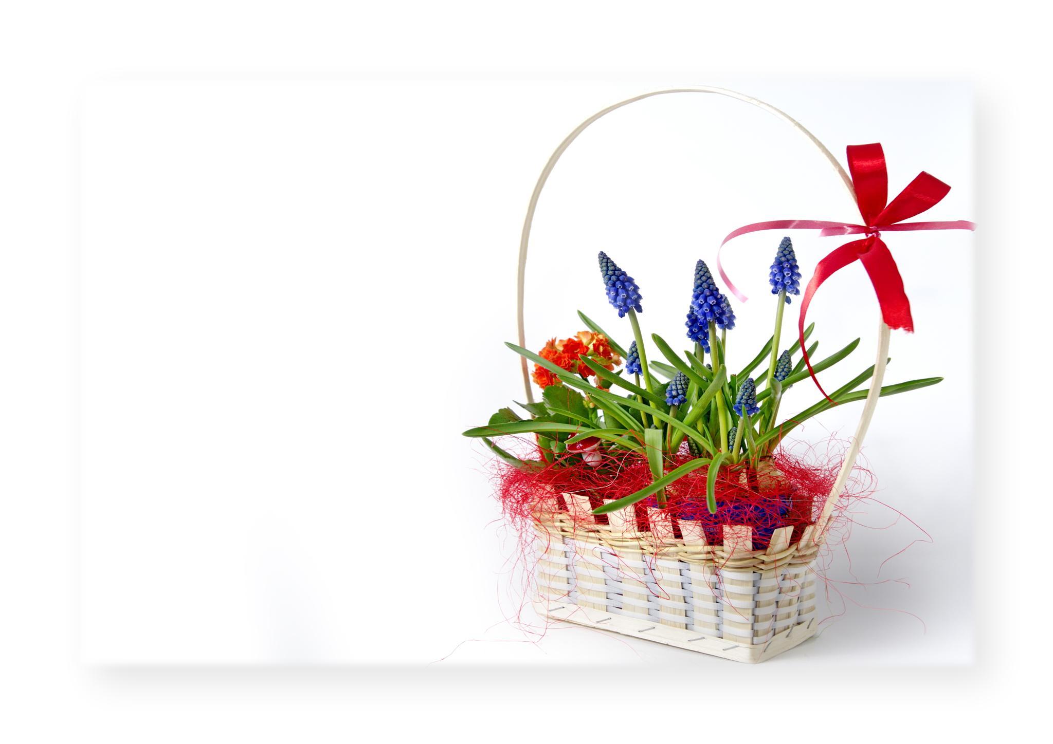 flowers by edyctin
