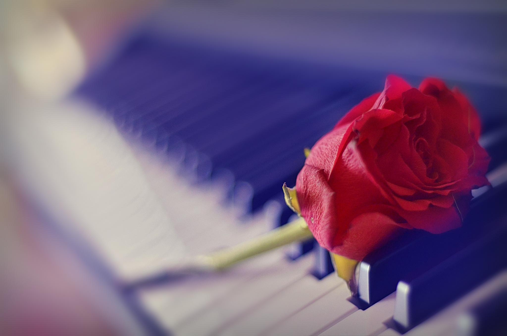 piano love by edyctin