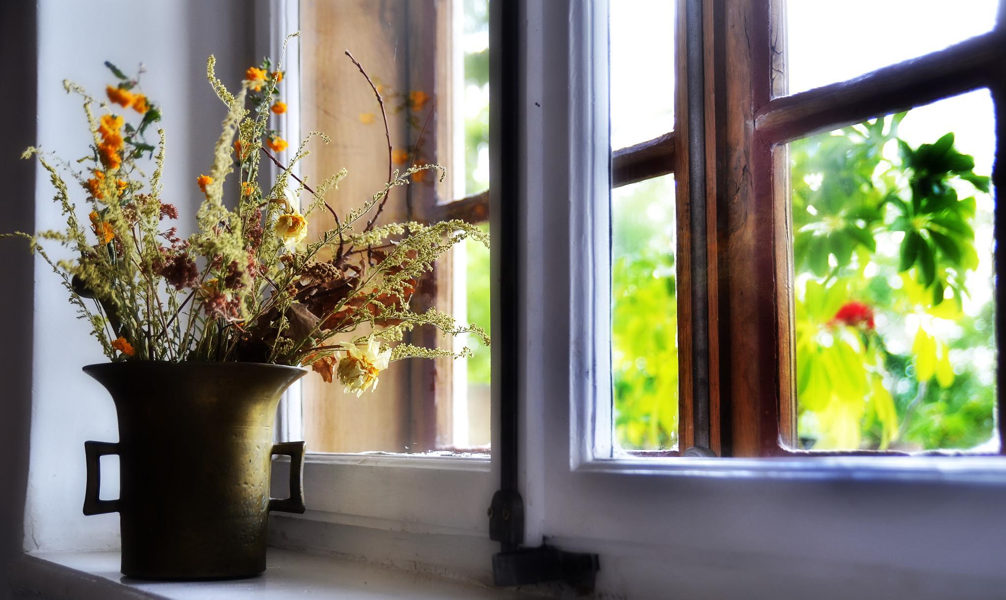 window by edyctin