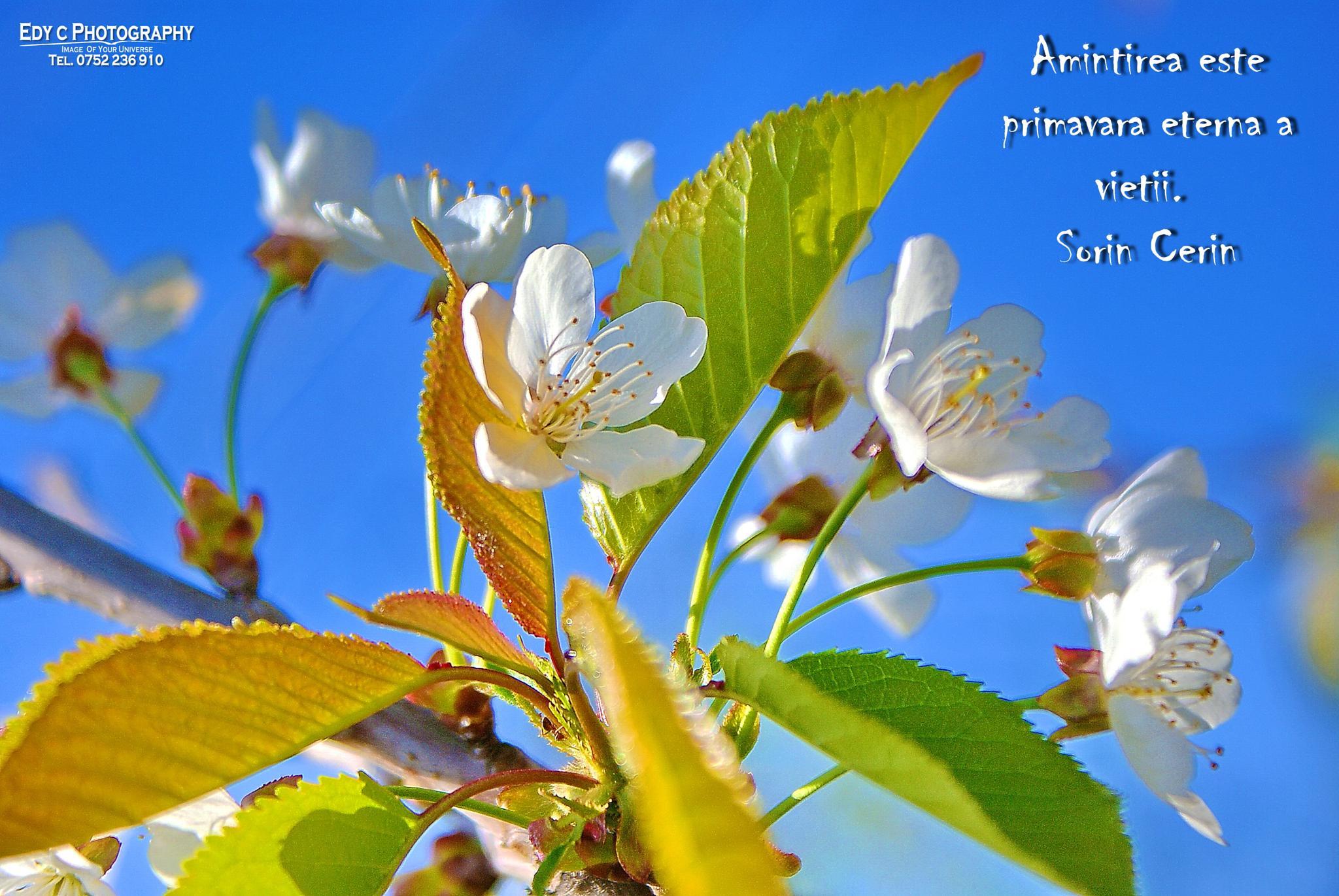 spring flowers by edyctin