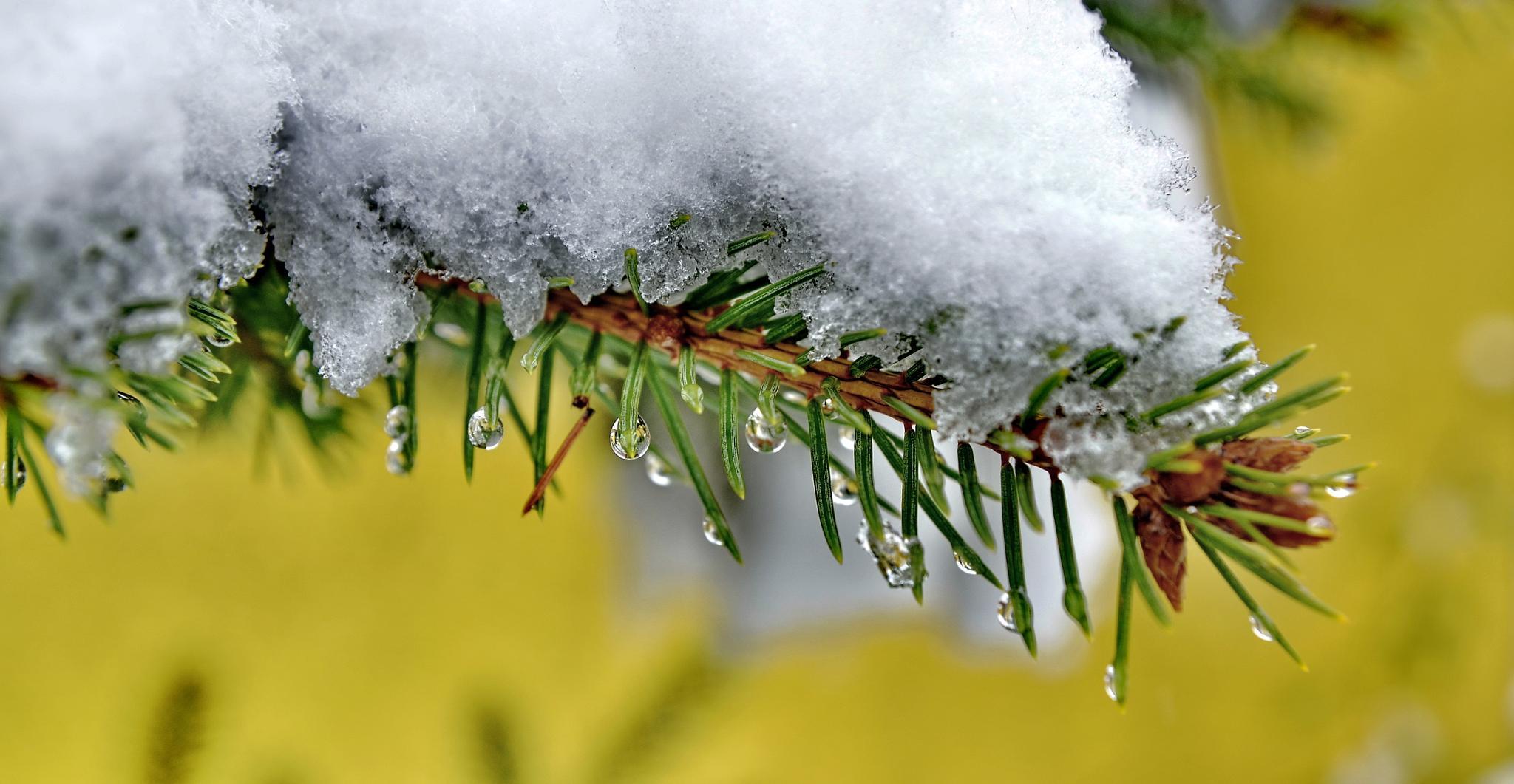 snow & drop by edyctin