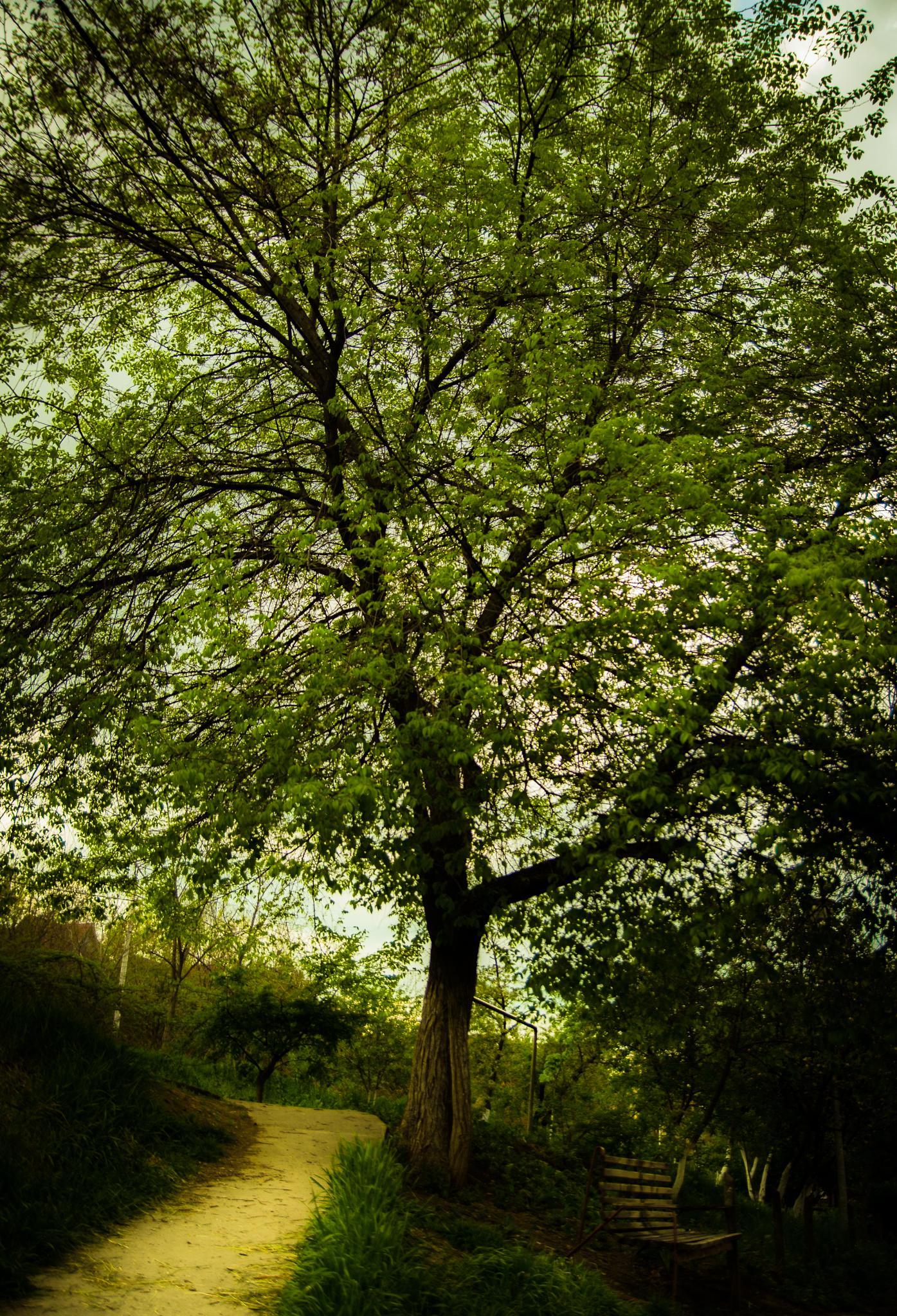 bench from tree by edyctin