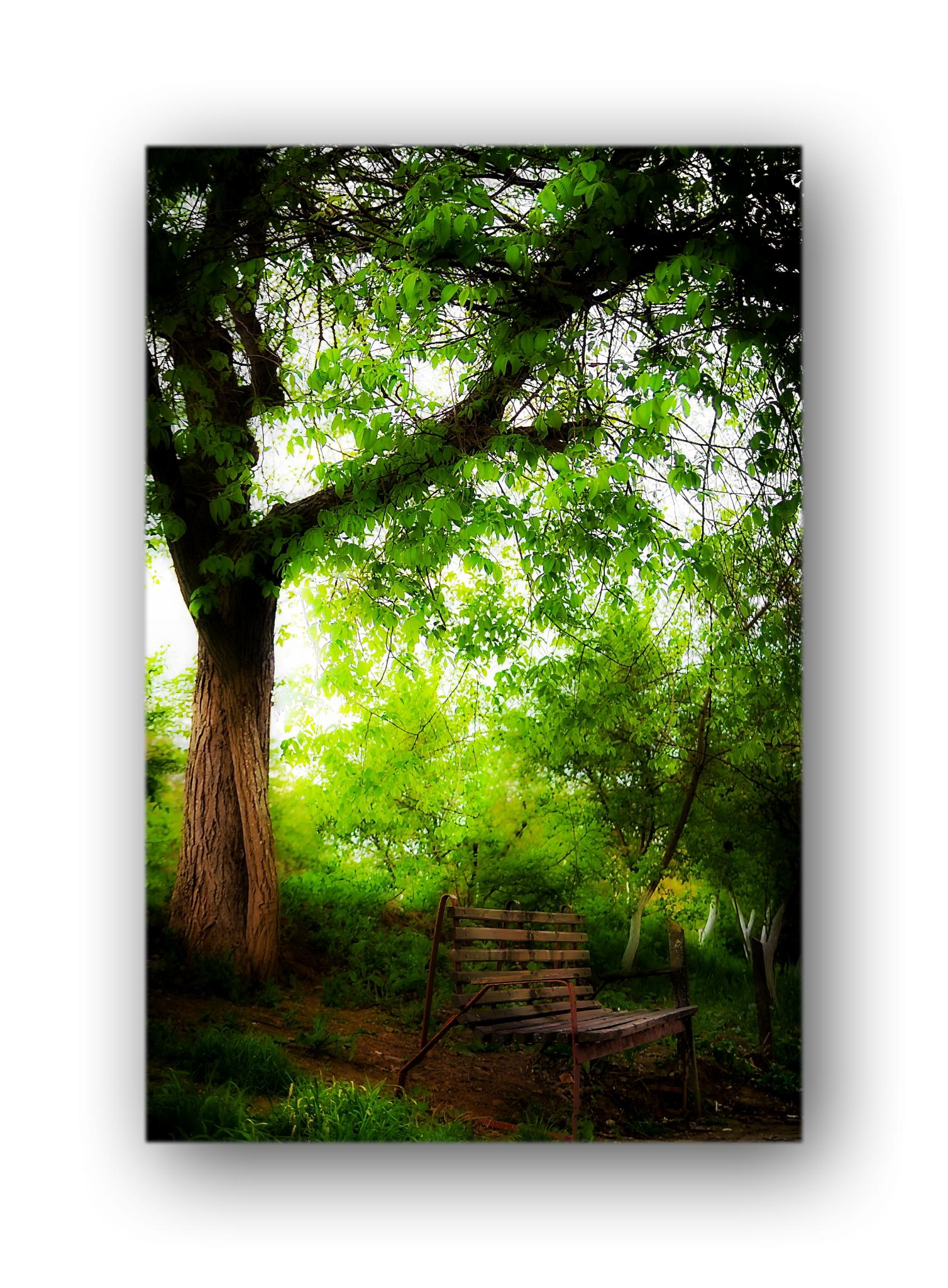 Photo in Nature #bench #tree #nature