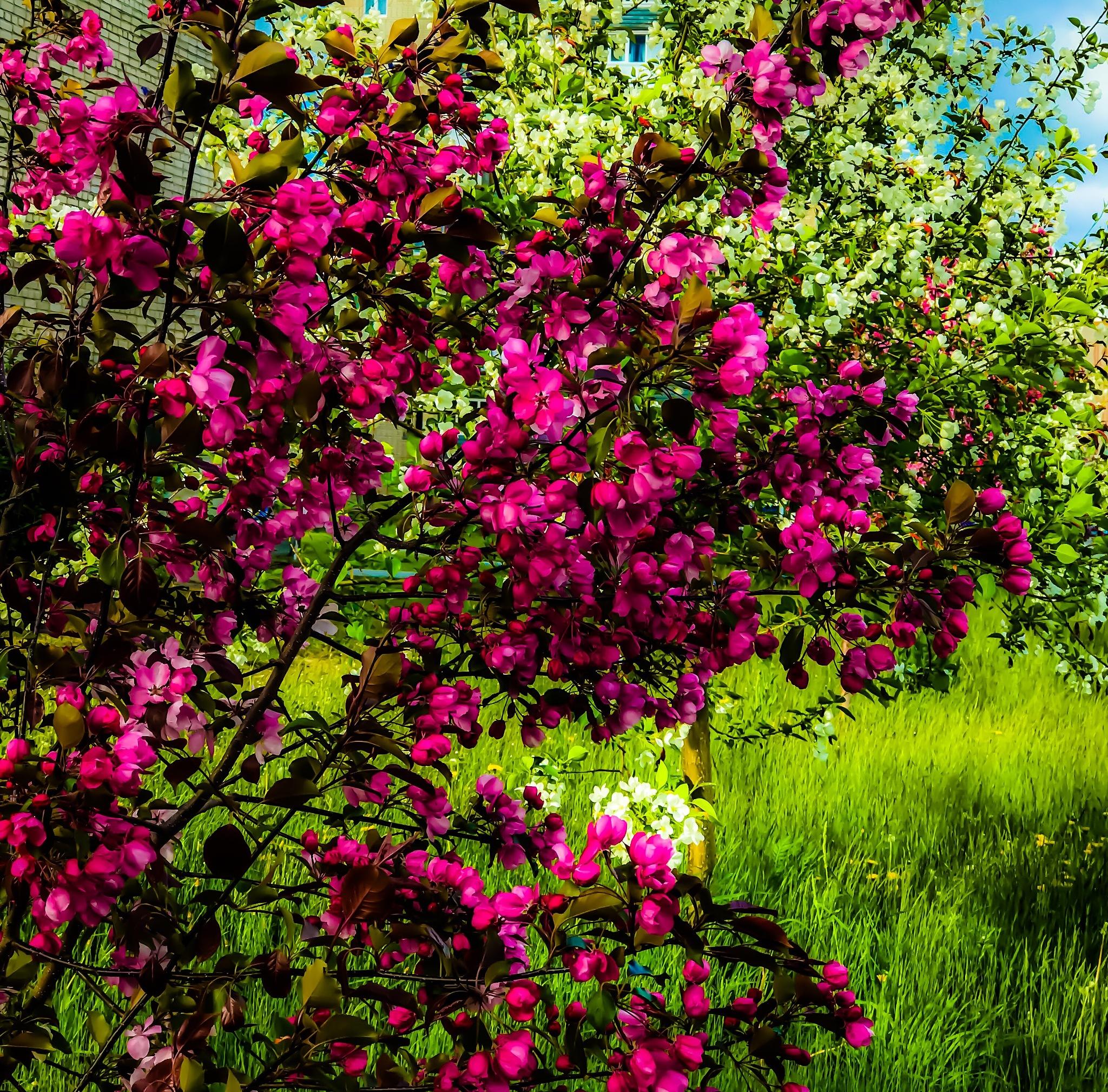 Blooming Season  by iensueno