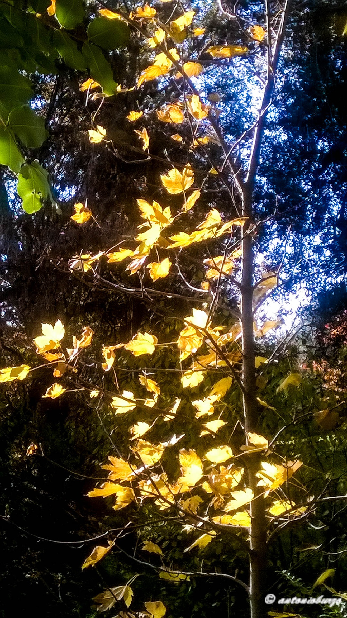 Yellow by antonioburzo