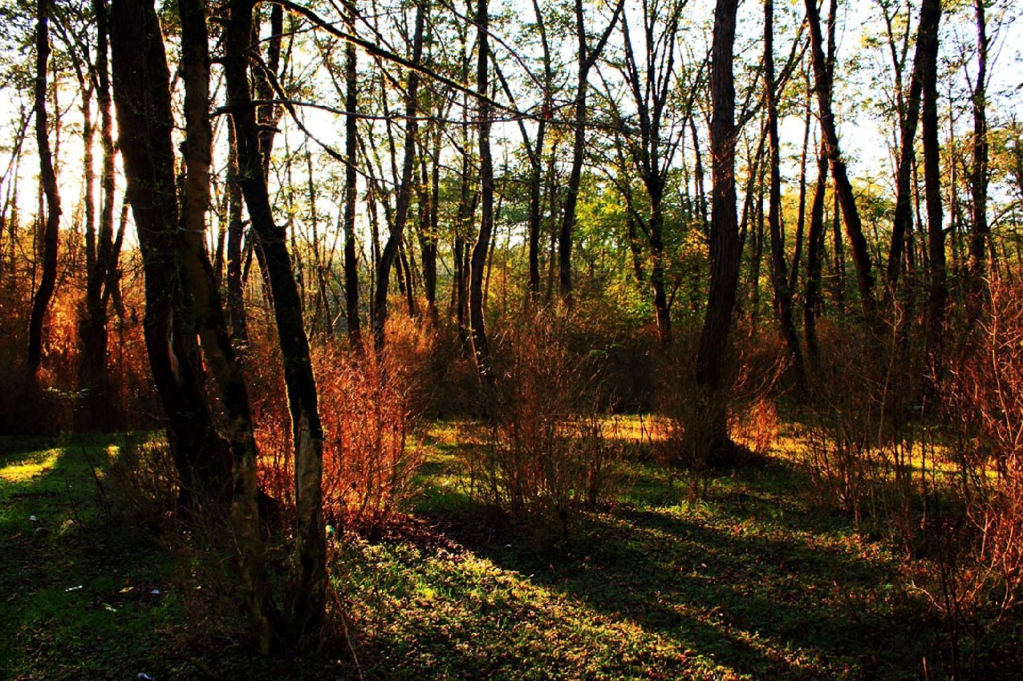 Jungle, Lights and Shadows by M. Reza babagoli