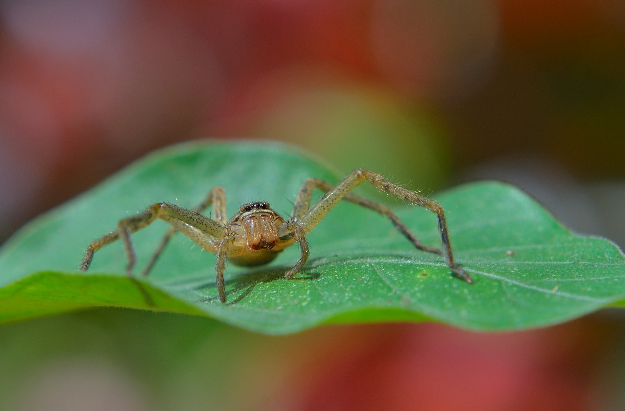 Spider by djerrybansaleng
