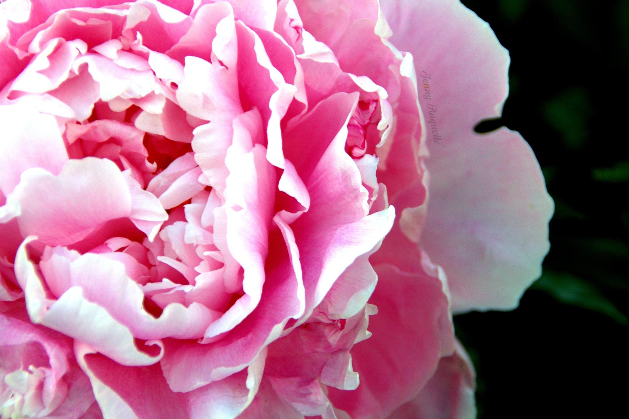Pink goddess by jennyraquelle