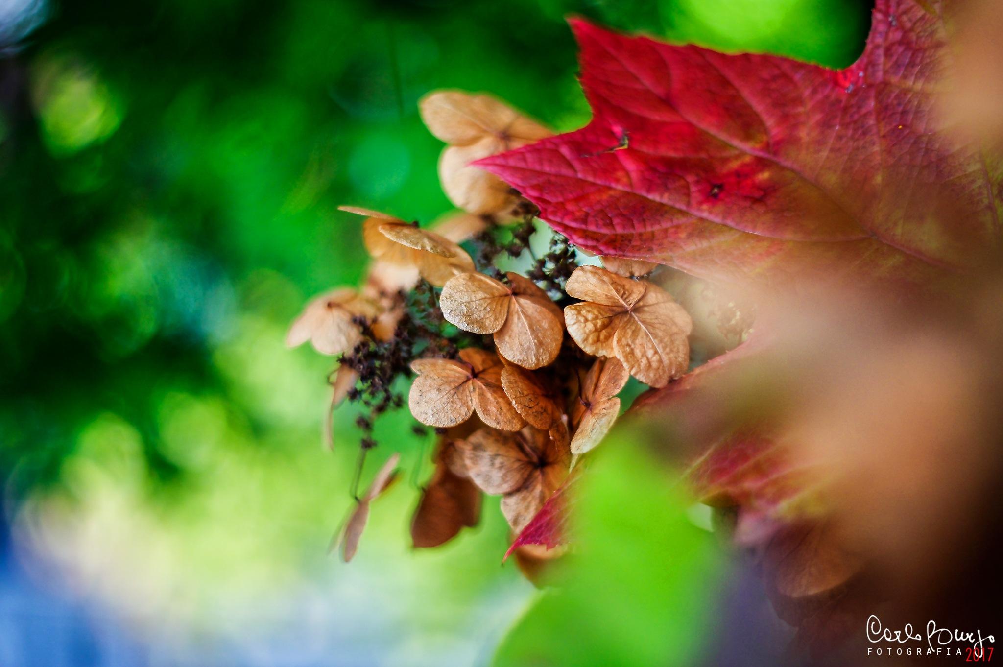 Autumn colors by Carlo Burzo