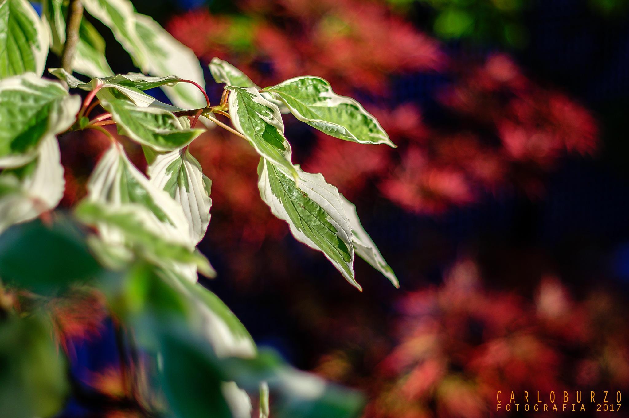Autumn in my garden by Carlo Burzo