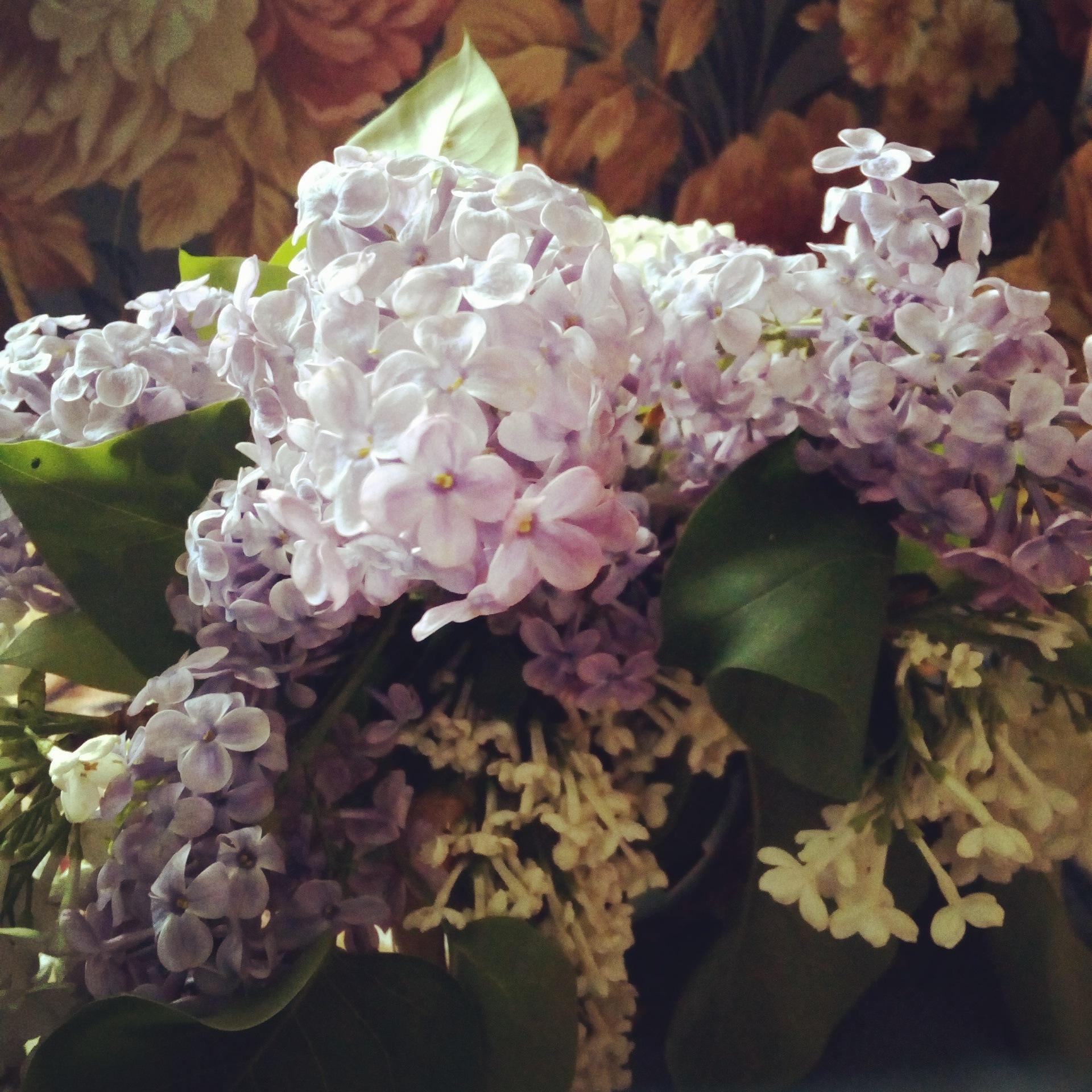 Flower by Mara Barova--Marcella