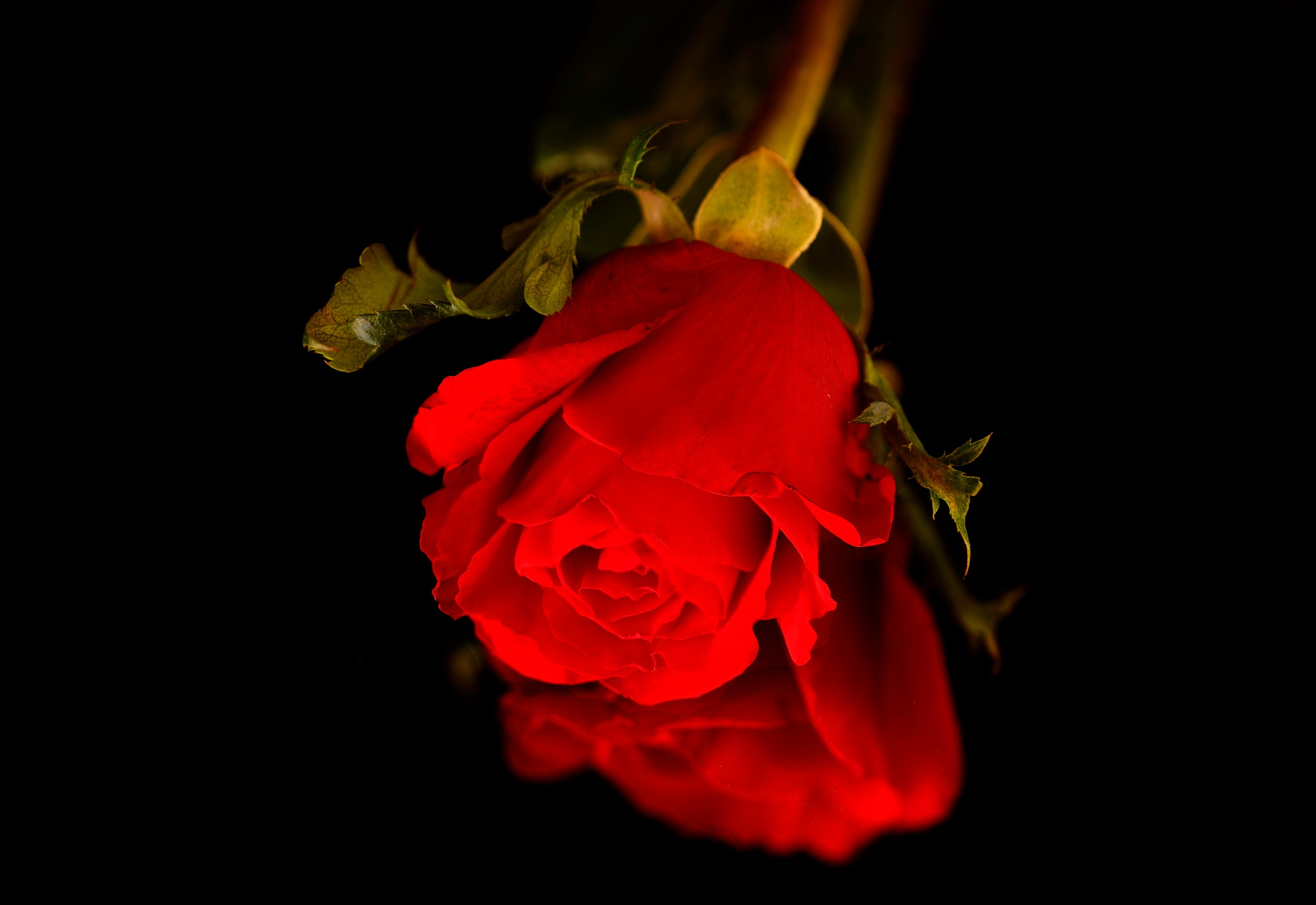 Photo in Random #rose #red #reflection