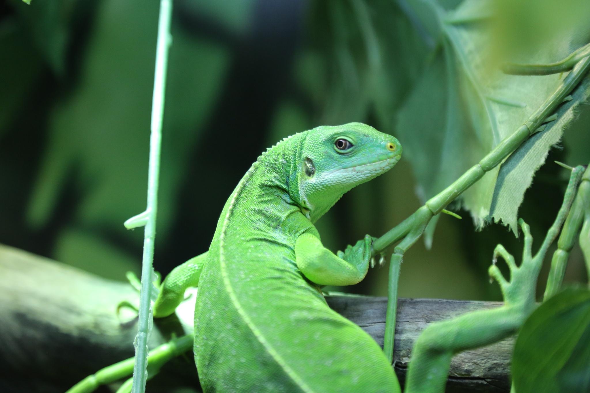 Chameleon by Debbie Engelbrecht