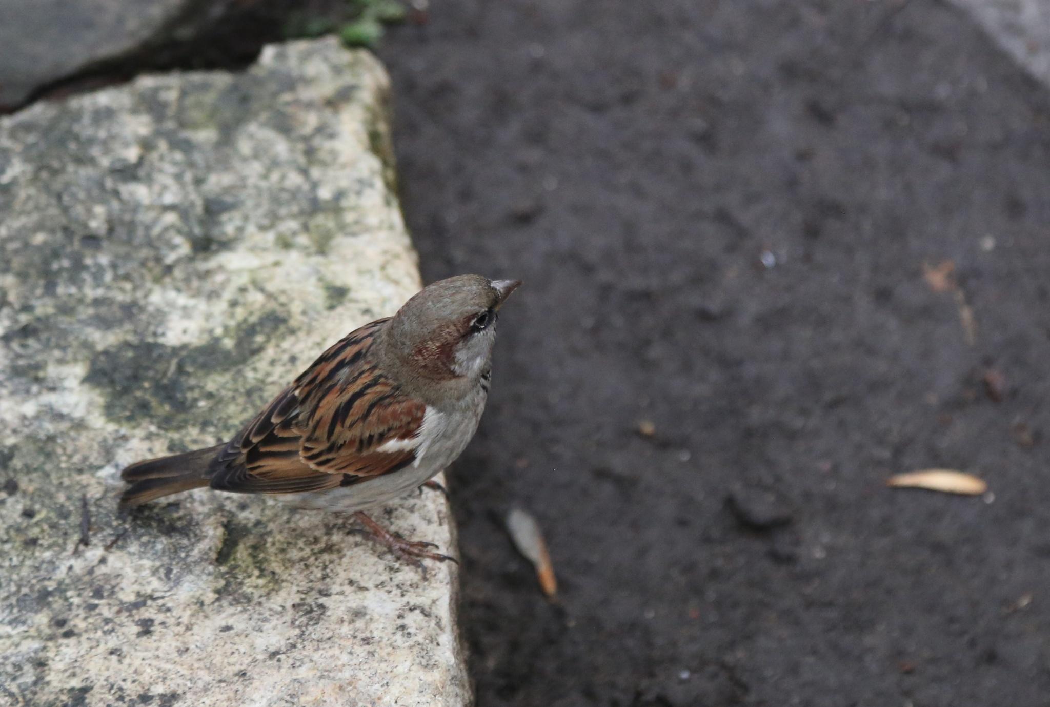 Little bird by Debbie Engelbrecht
