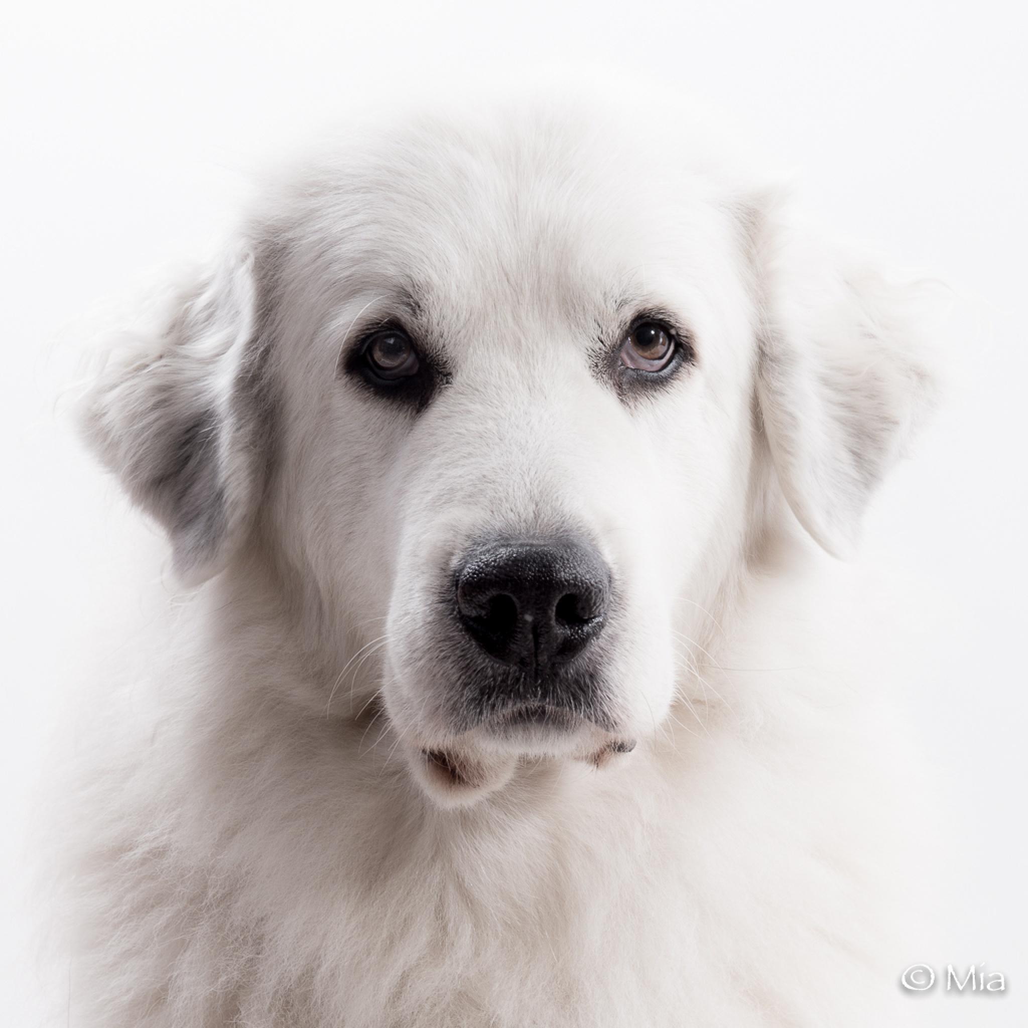 Dog by Mia Johansson