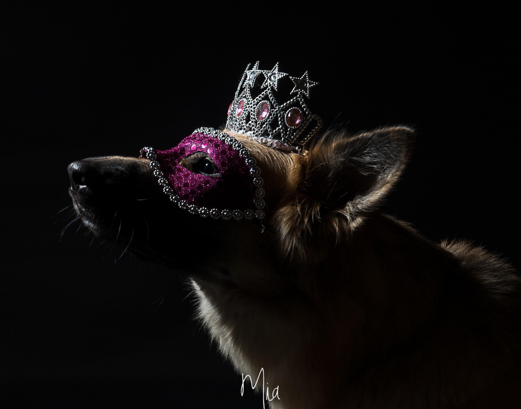Dog in studio by Mia Johansson