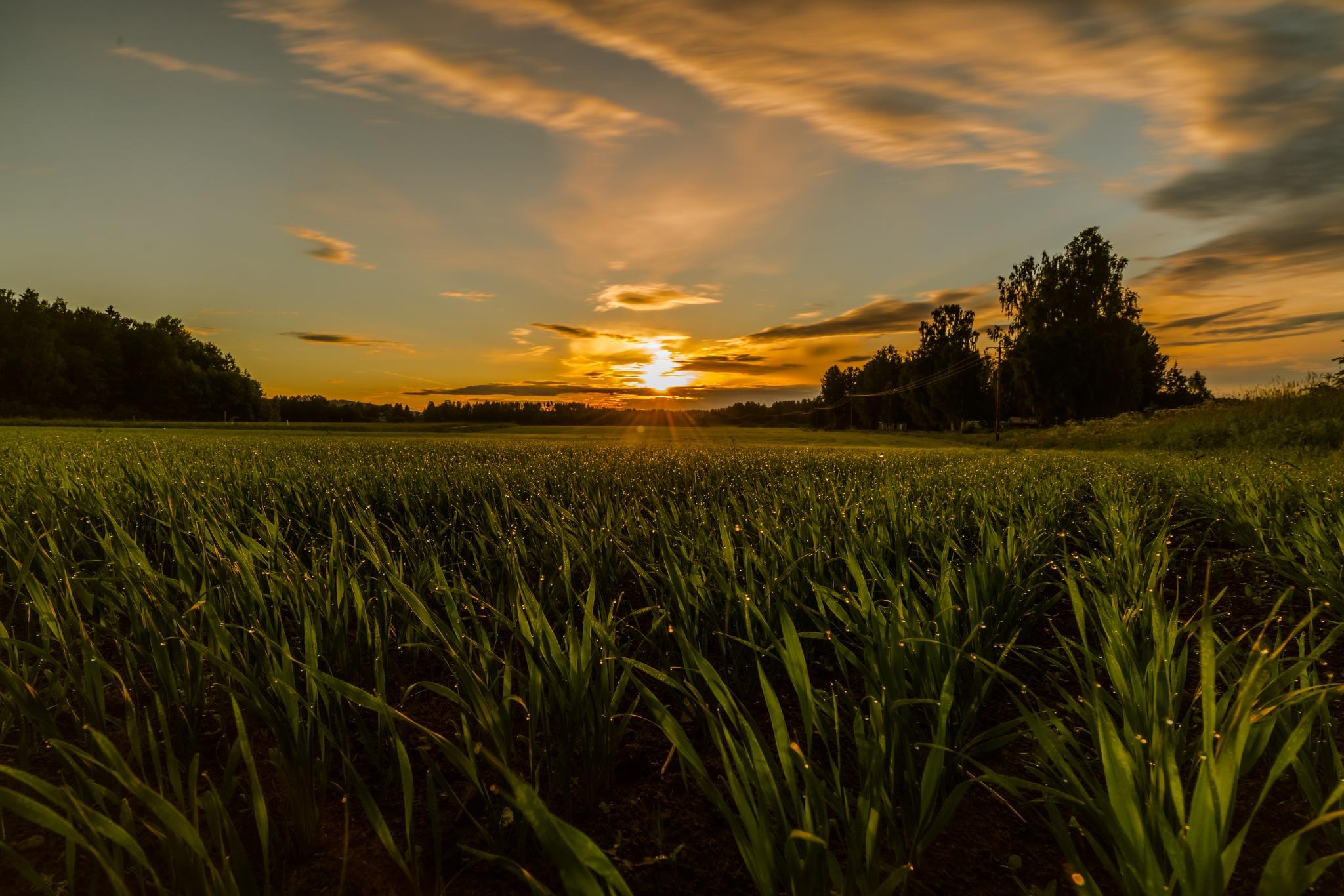 Sun by Lars Nyquist
