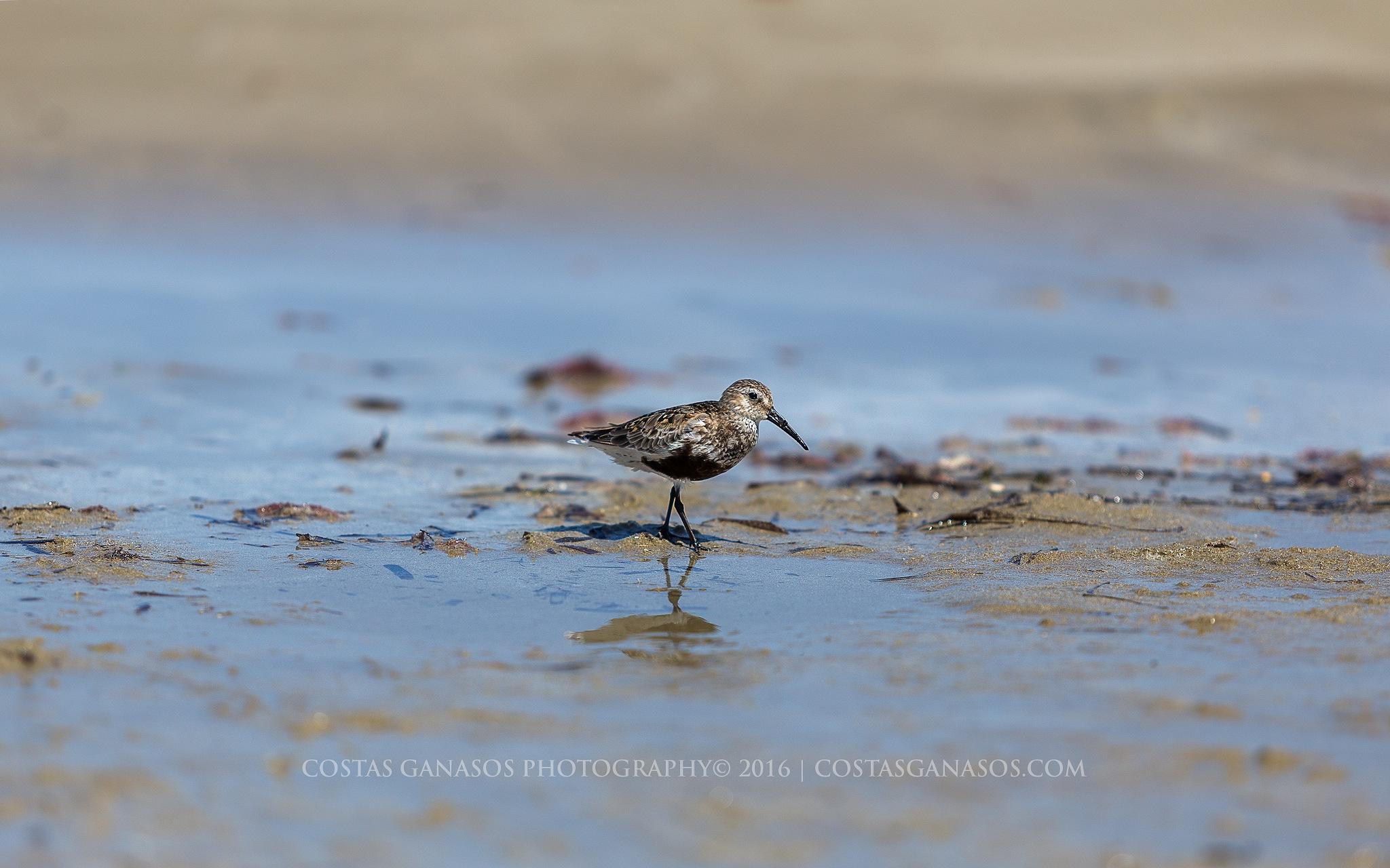 Sea Bird by CostasGanasos