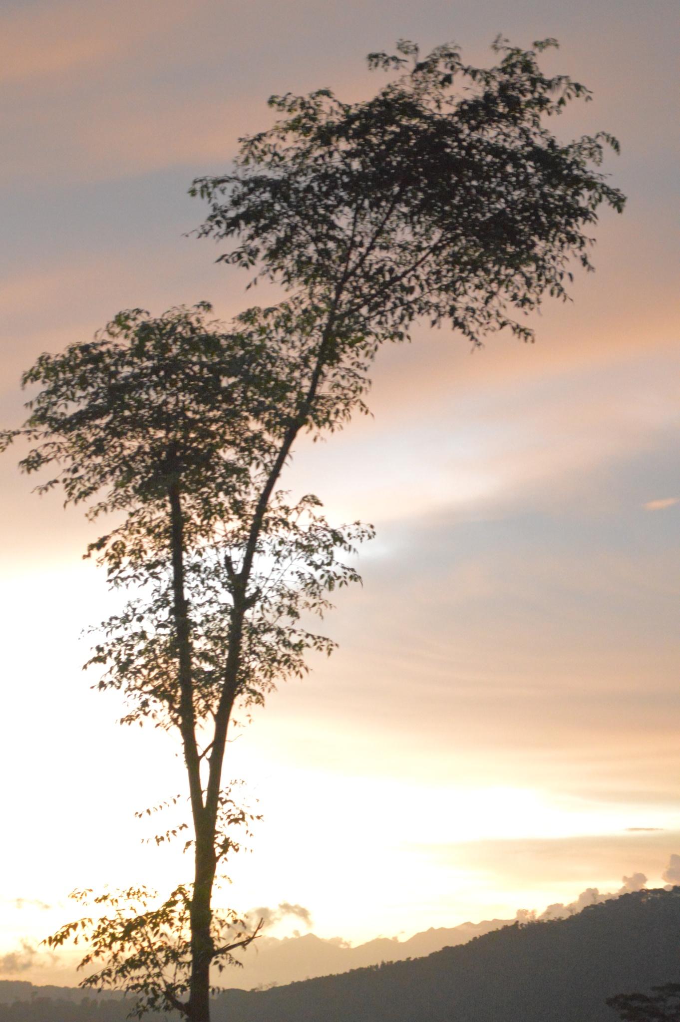Lukisan Senja  by Pak Gigih Setya