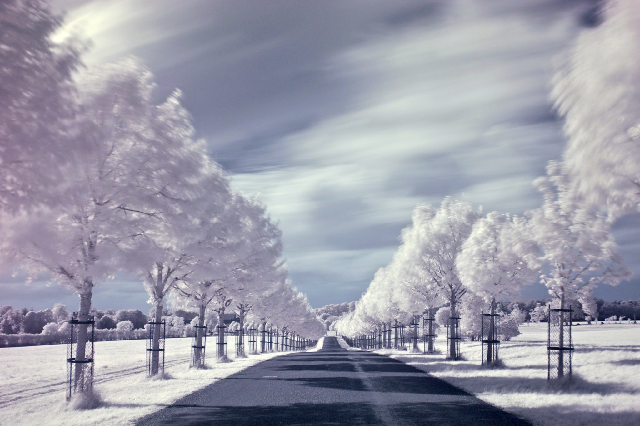 Hindsgavl Allé in infrared. by Tue Romanow