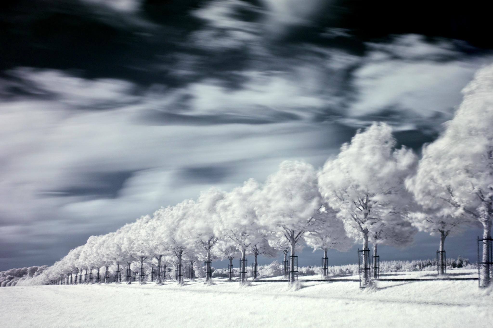 Hindsgavl Allé in infrared II. by Tue Romanow