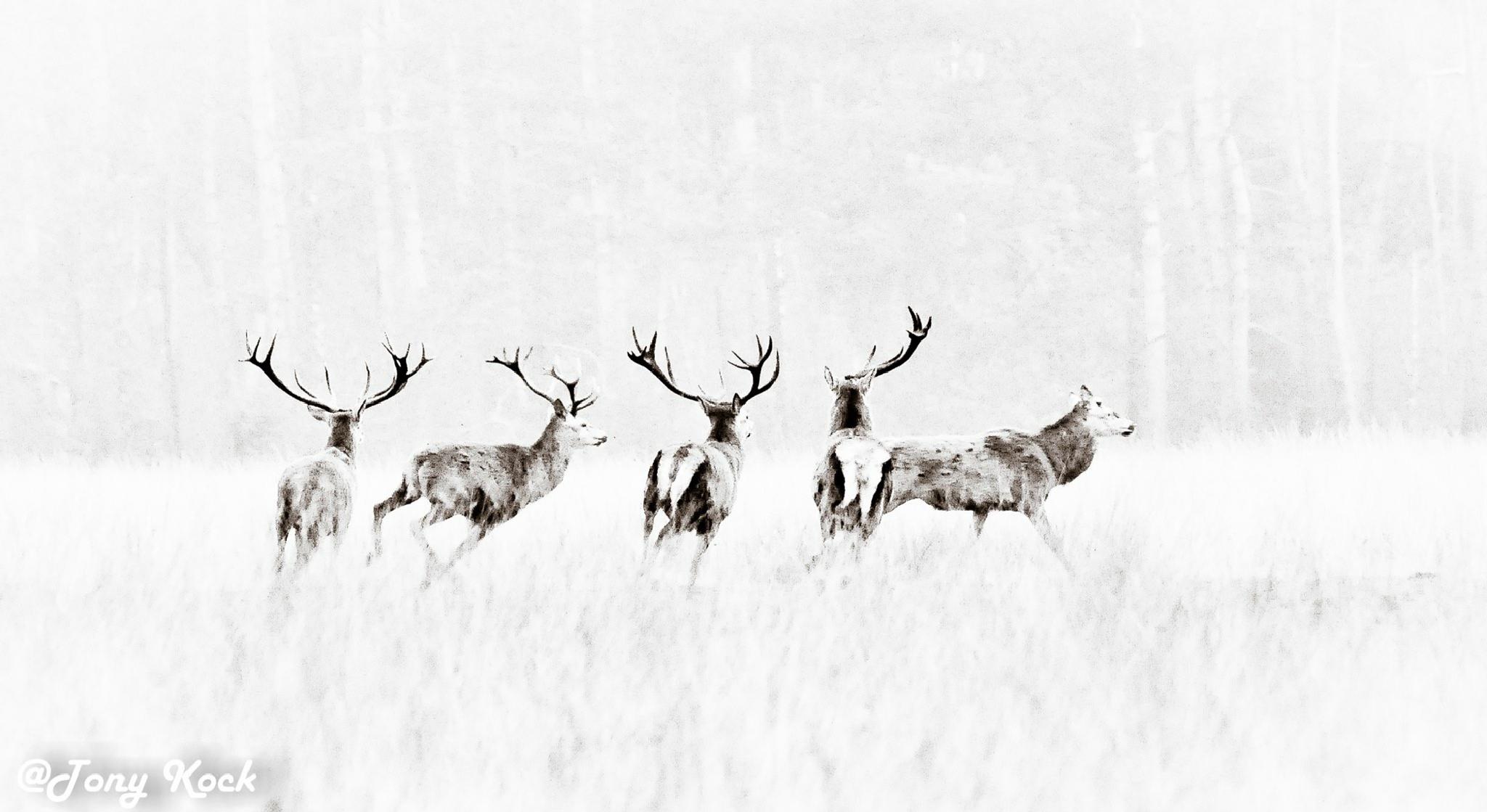 Untitled by Antonia kock