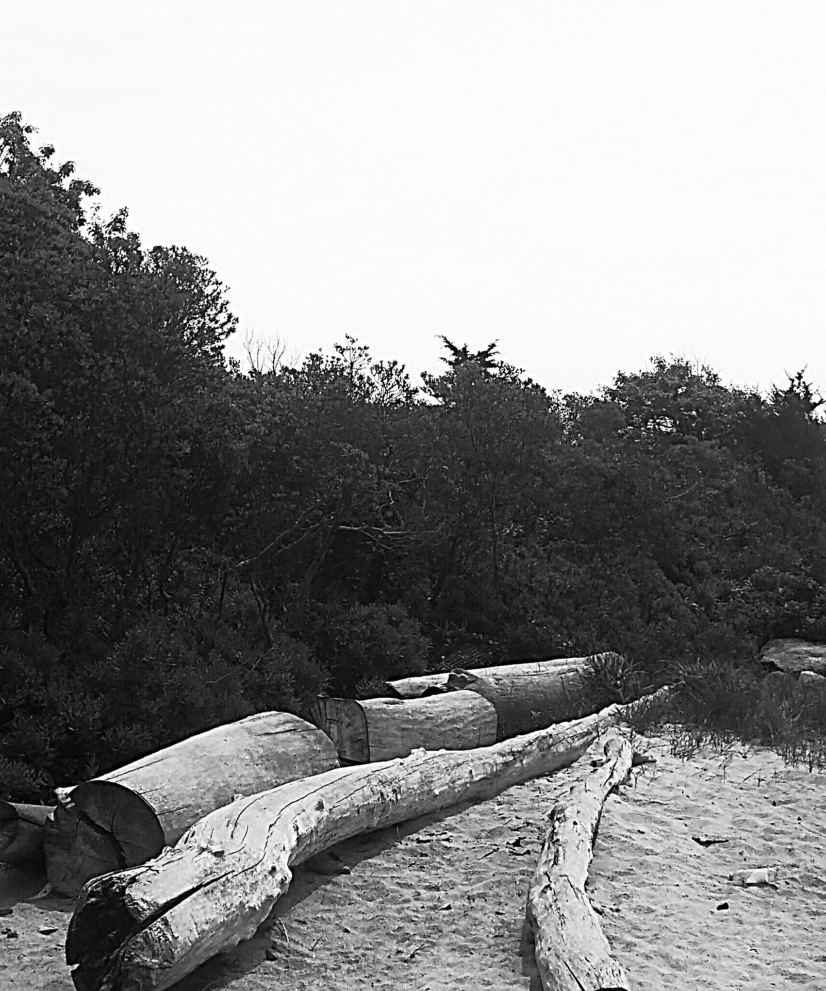 driftwood by Dru Coleman