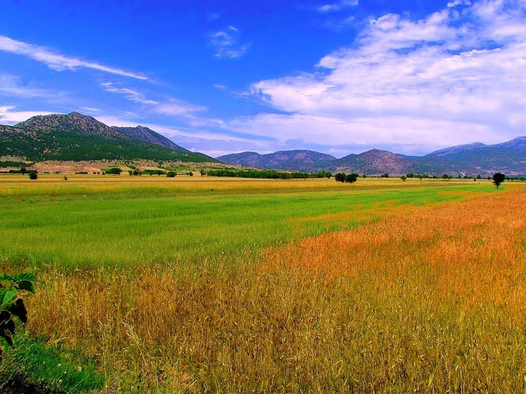 Crop fields by refikyavas