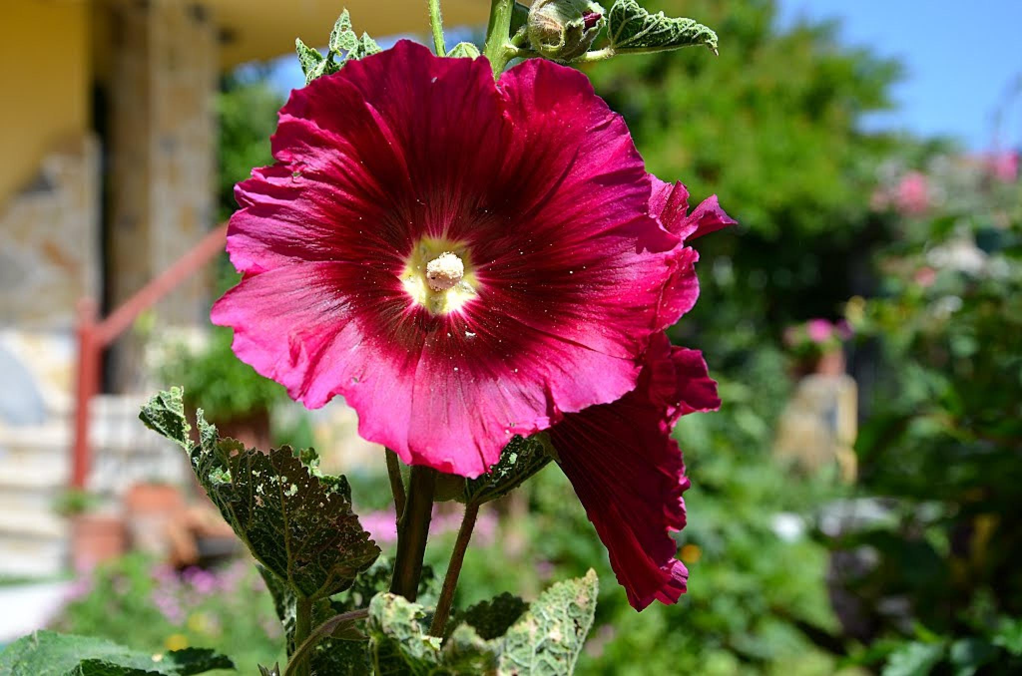 Flowers by refikyavas
