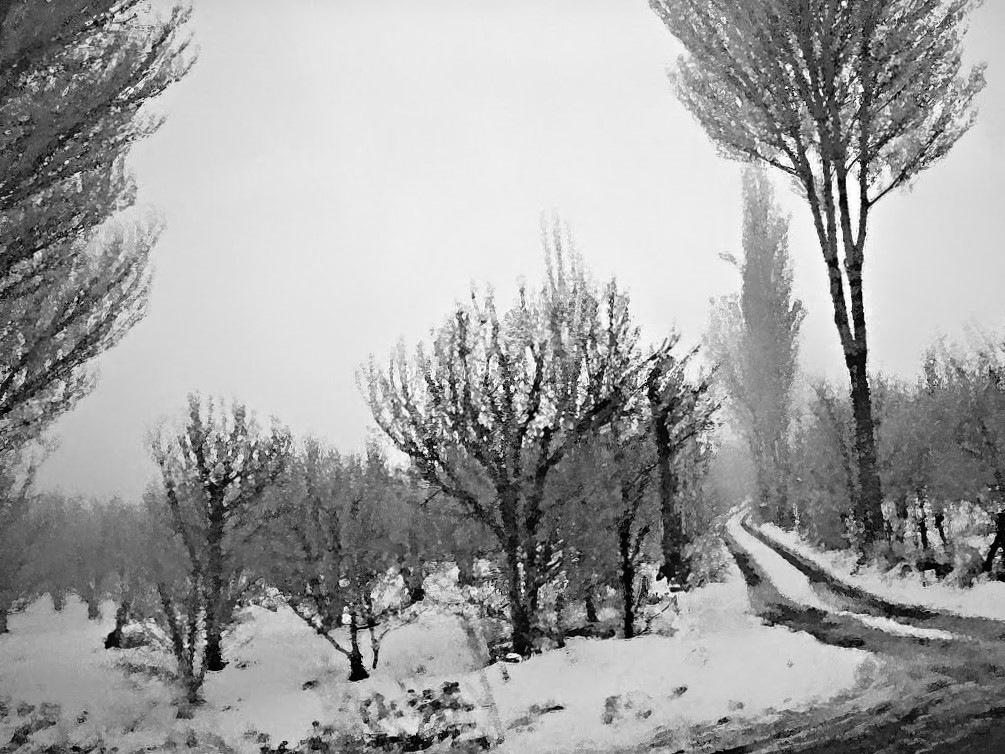 Winter in cherry yards by refikyavas