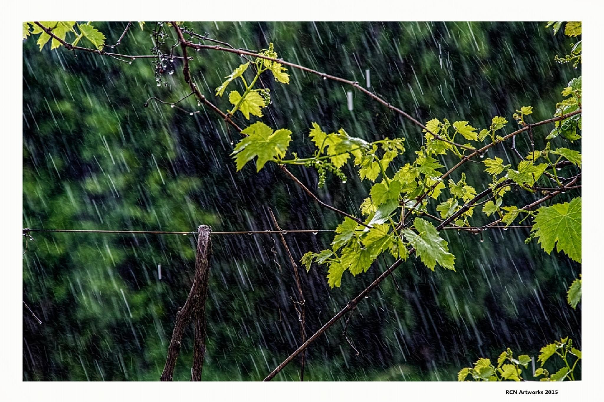 Rain Rain Rain  by Ricardo Castro Nunes