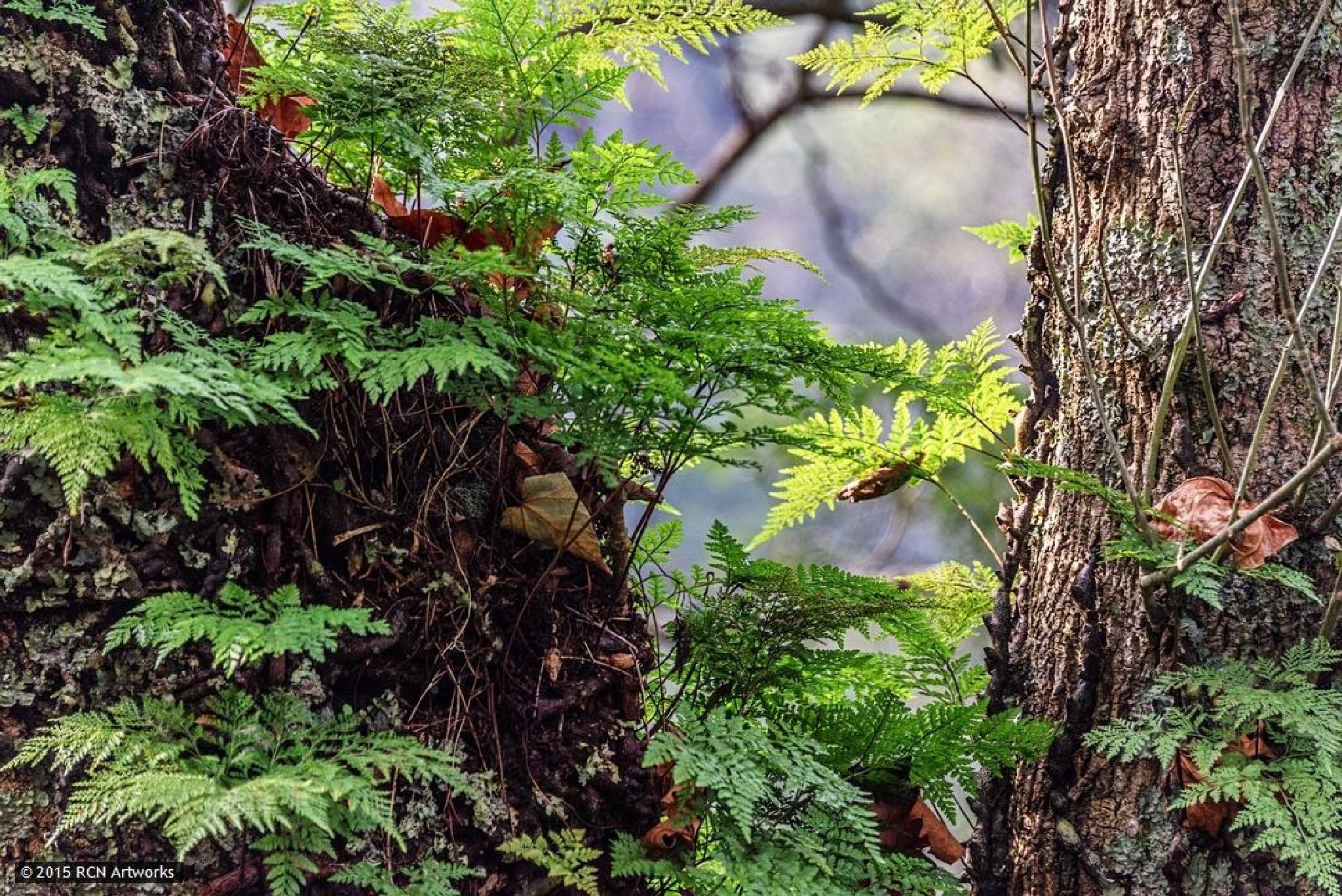 In the Micro-Forest  by Ricardo Castro Nunes