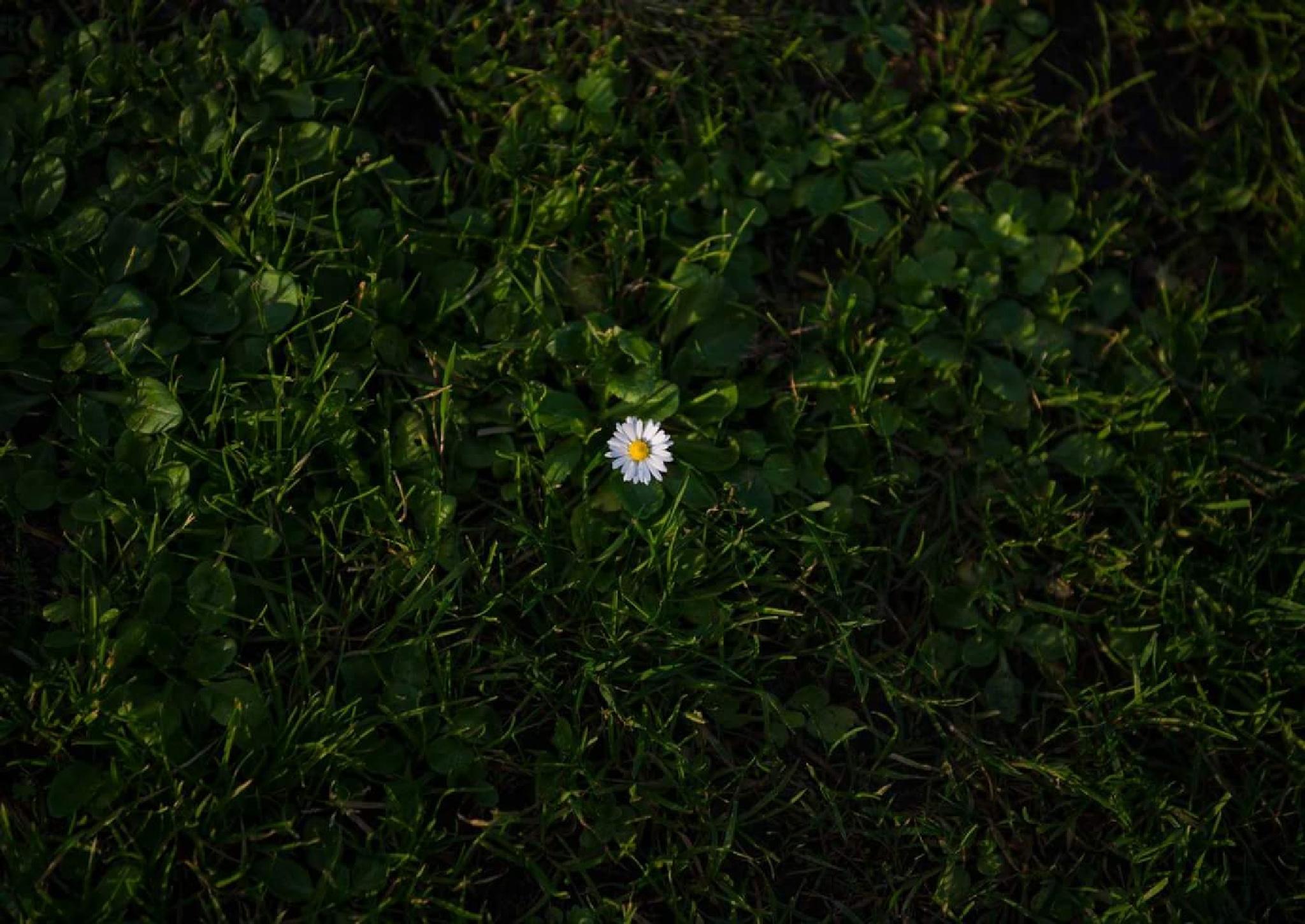 Flower by Long Xu