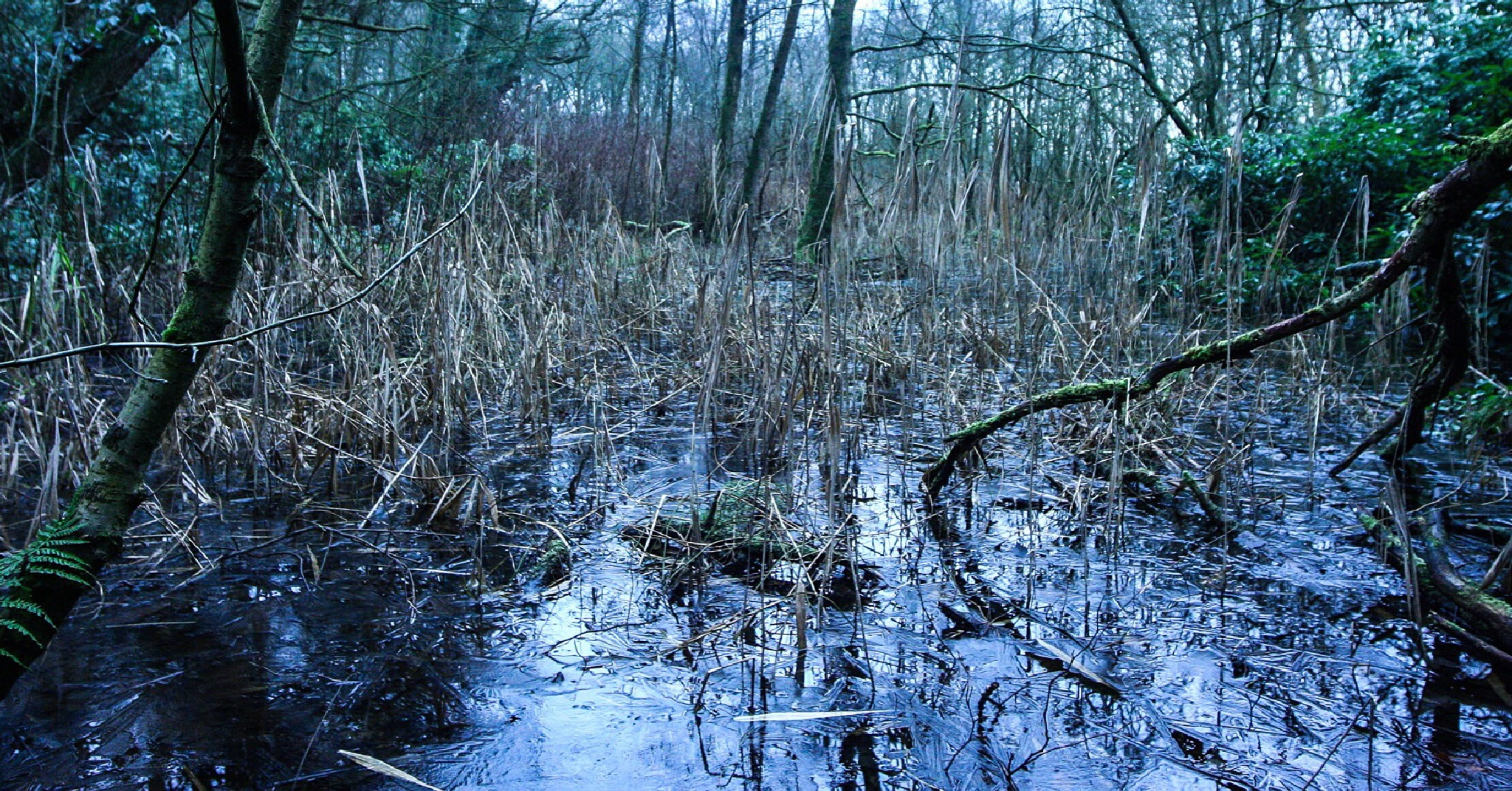 Iced swamp by Michael Grundy