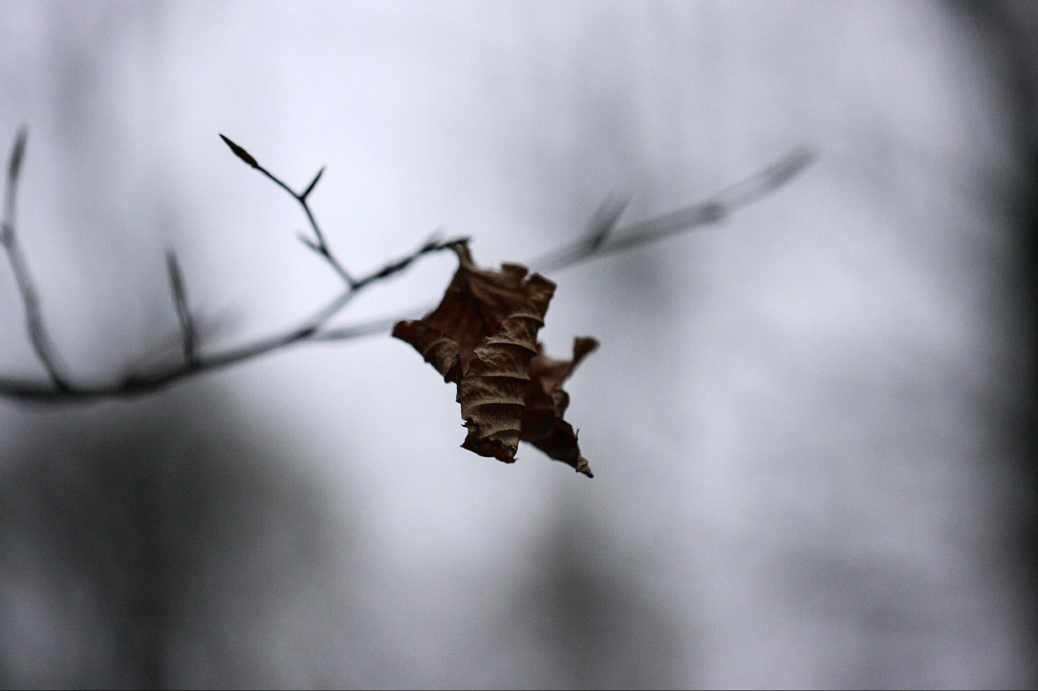 The Last Leaf by Michael Grundy