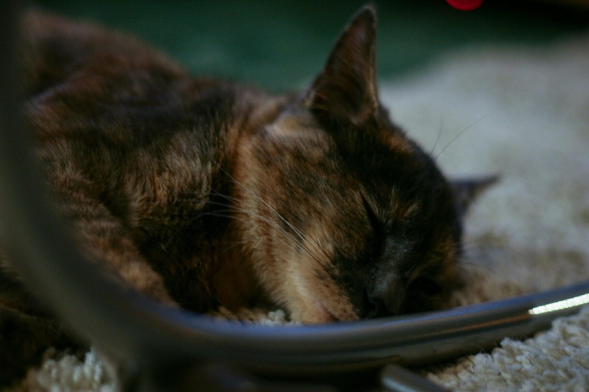 sleepy by Michael Grundy