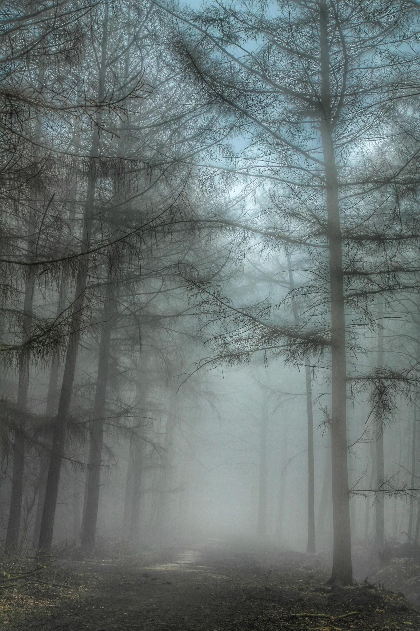 misty. by Benjamiin Van de Grift