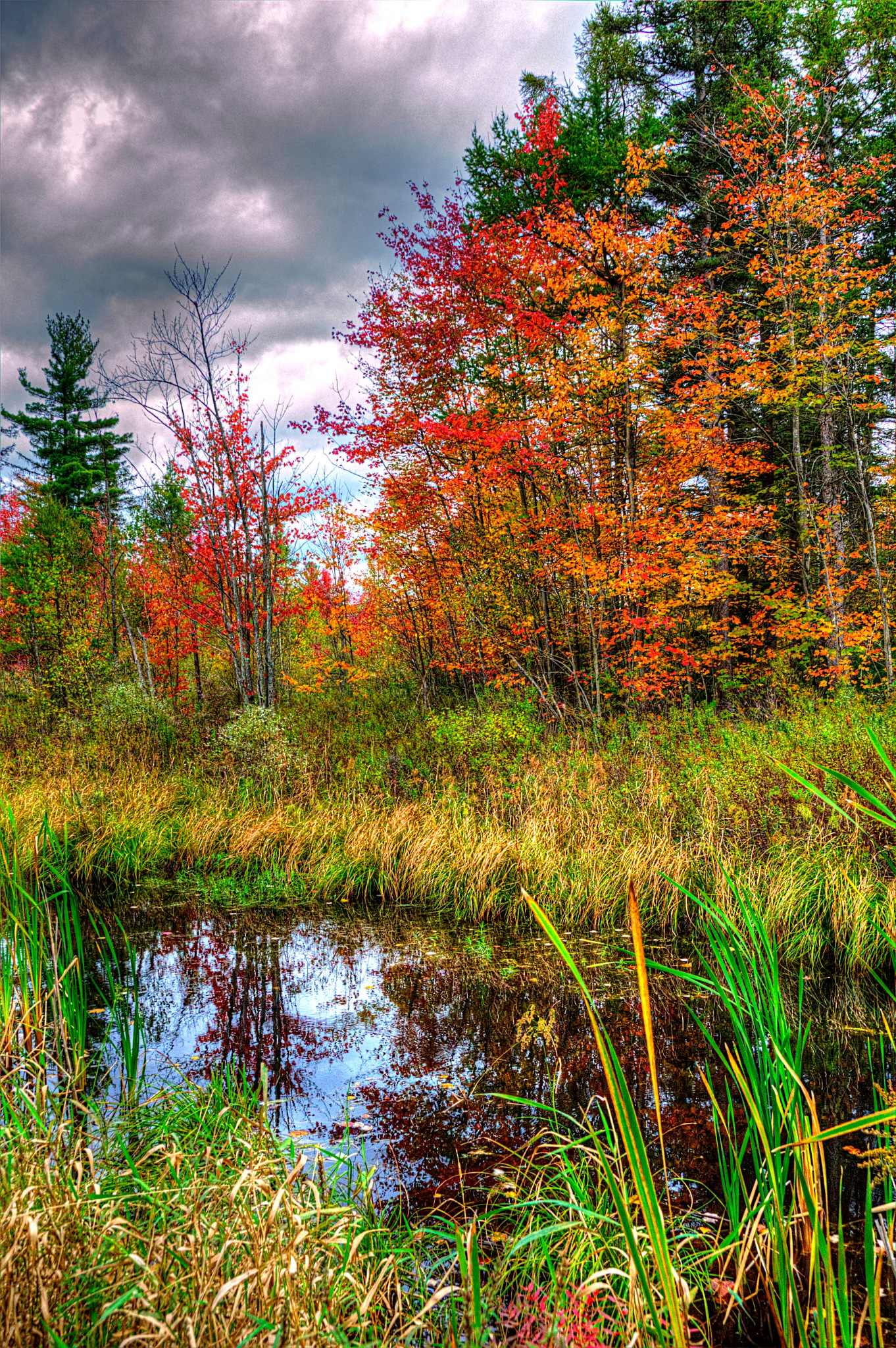 Fall In The Forest by Paul Deveau