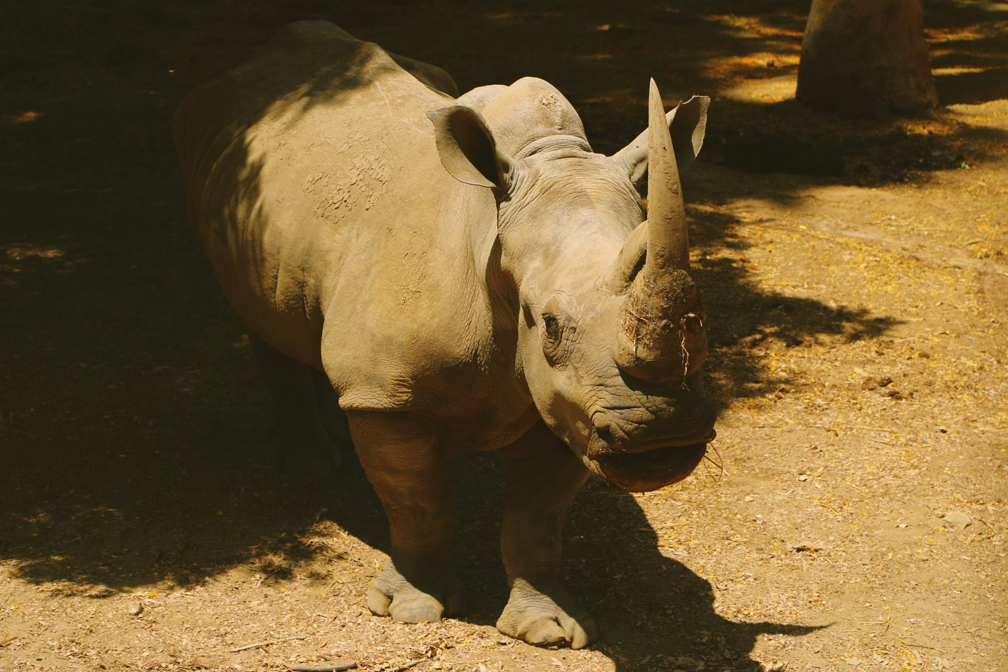 """"""" Save the Rhino """" by Somow Aser"""