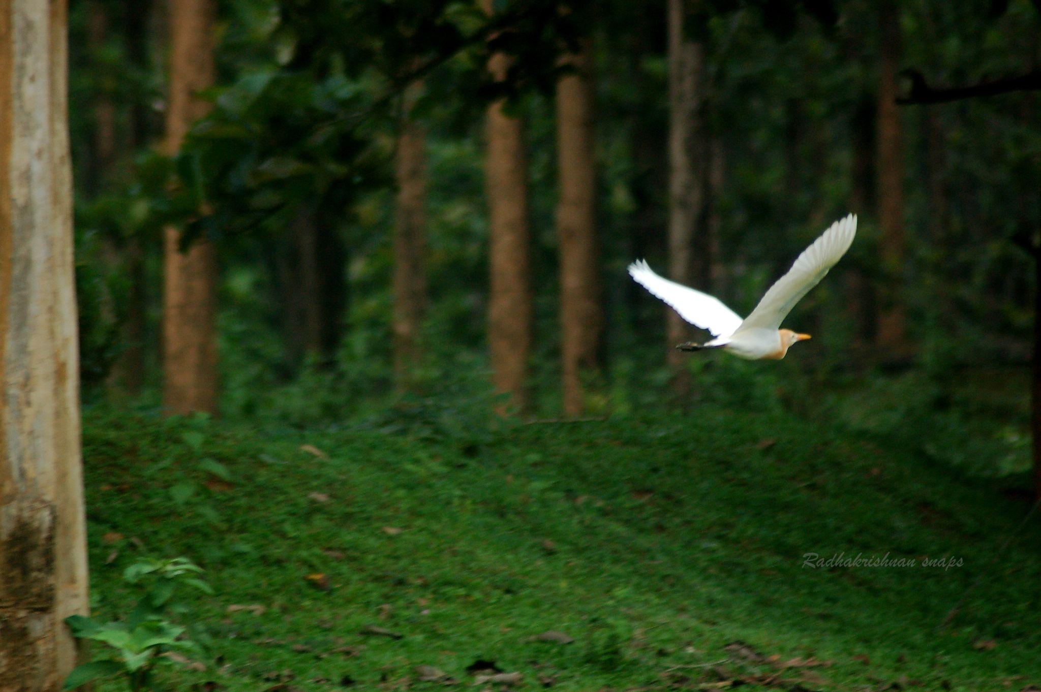 Fly by Radhakrishnan. AG