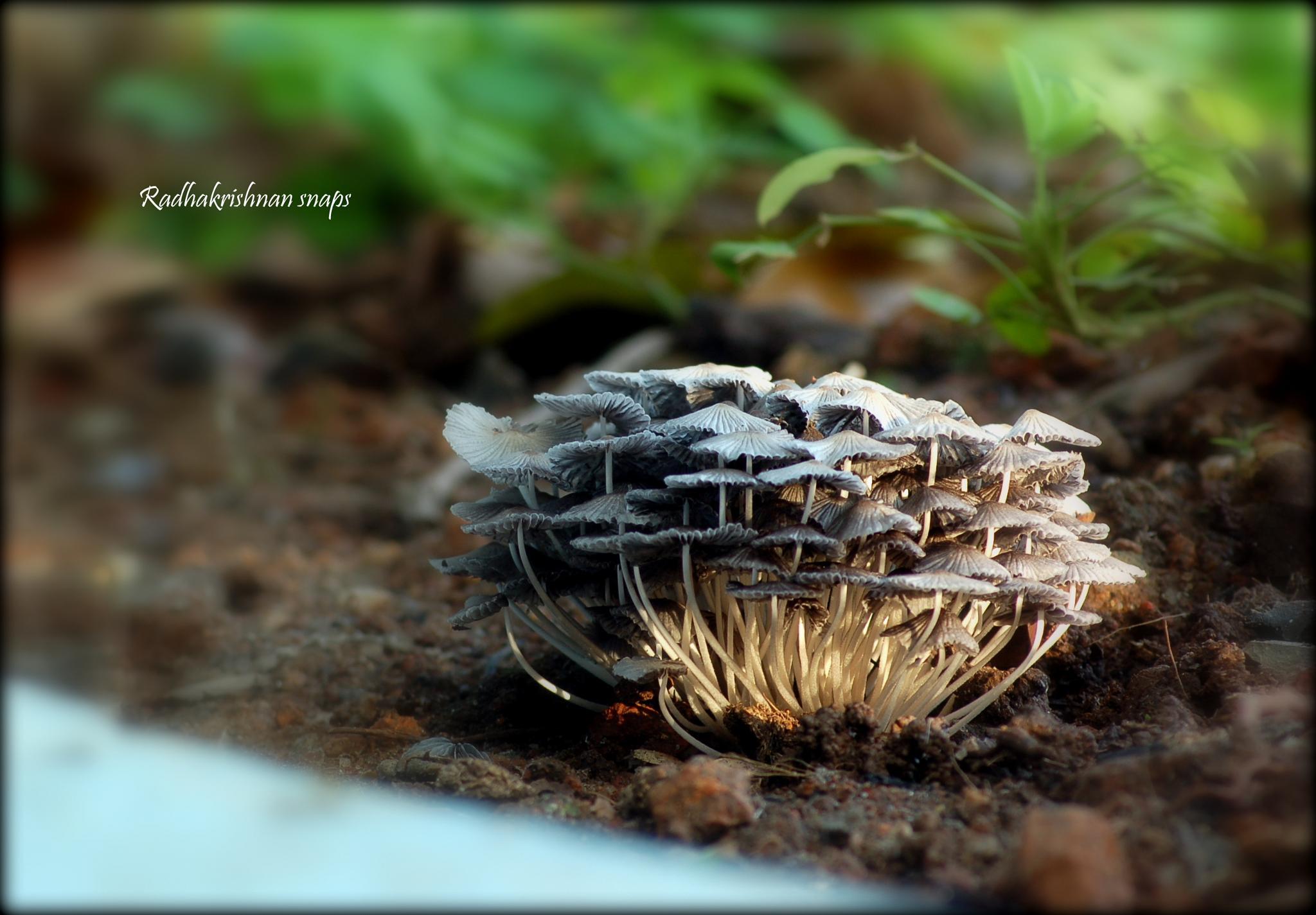 CROWD by Radhakrishnan. AG