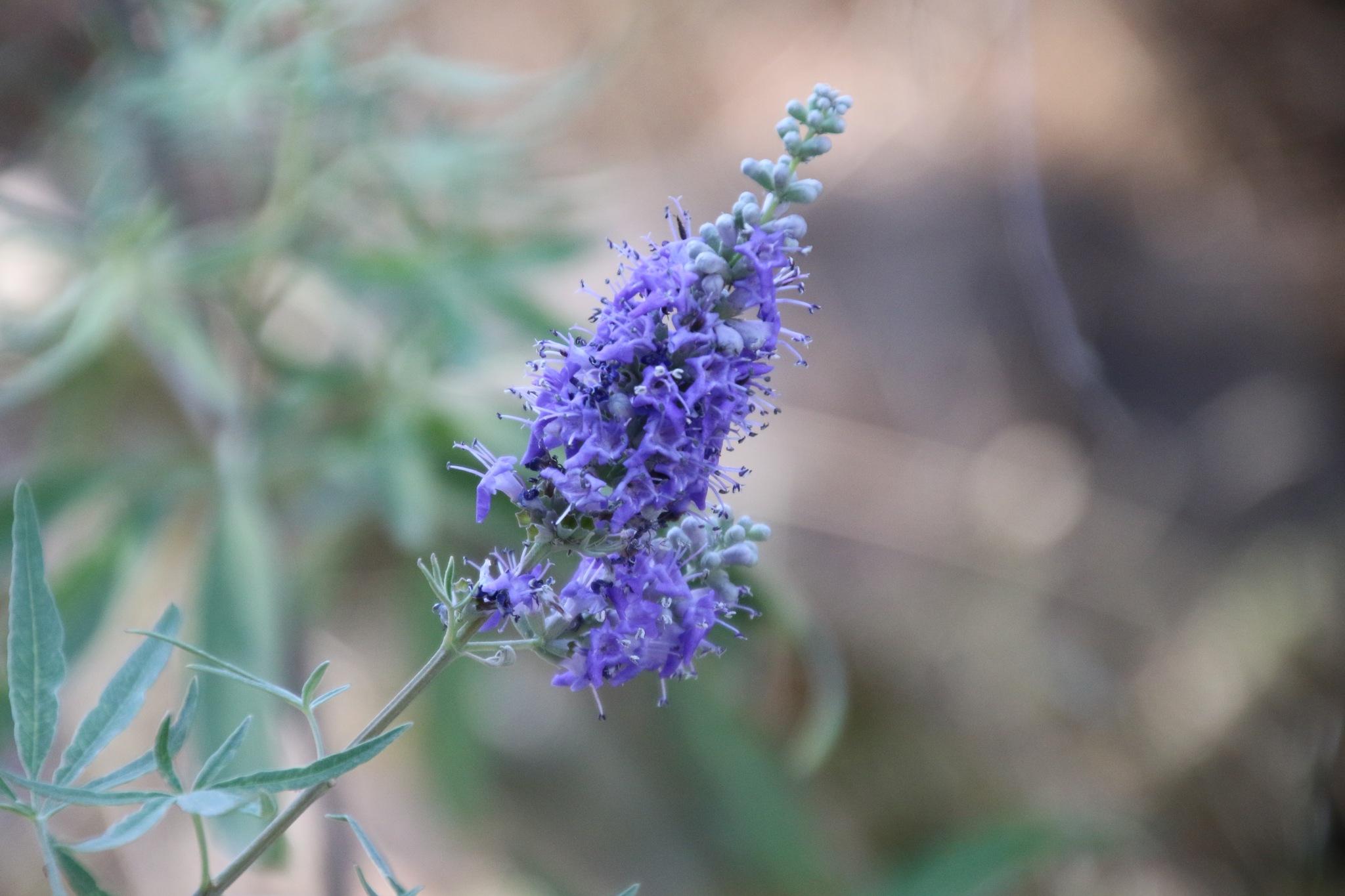 Flower for summertime by Atilla Gunhan Photograpy