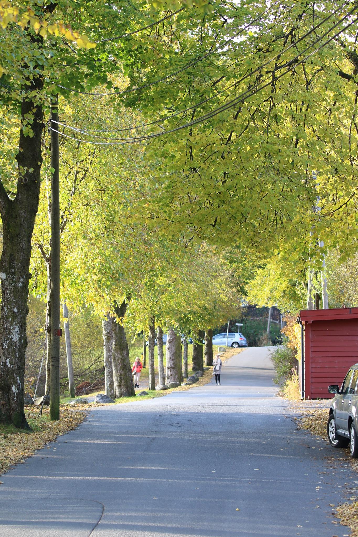 green in Autumn by Atilla Gunhan Photograpy