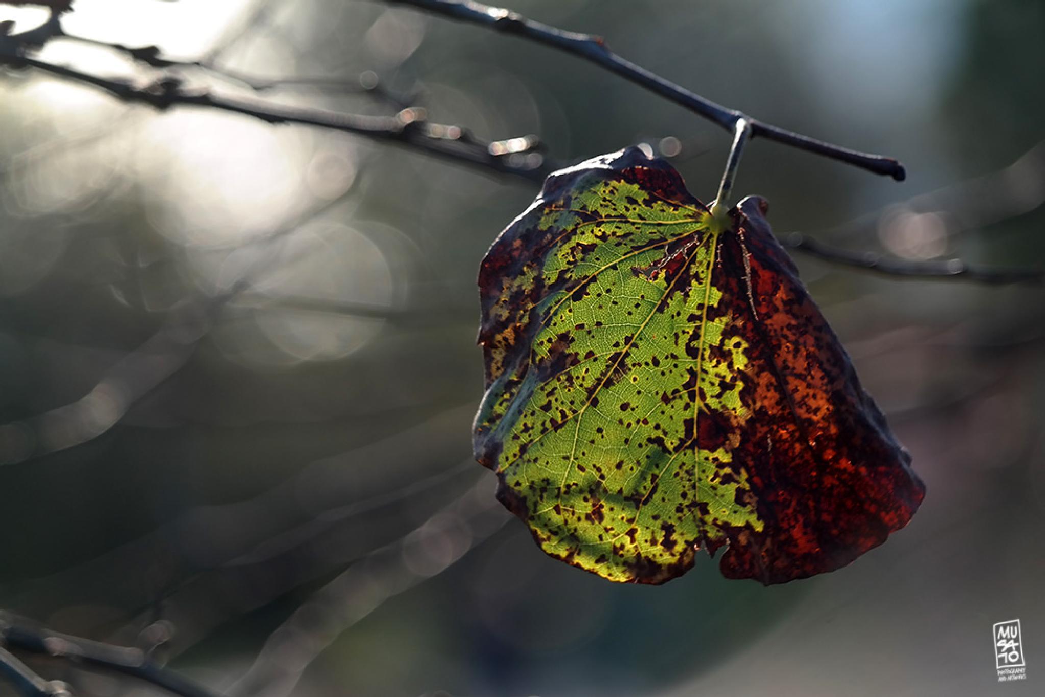 Fall by Musato